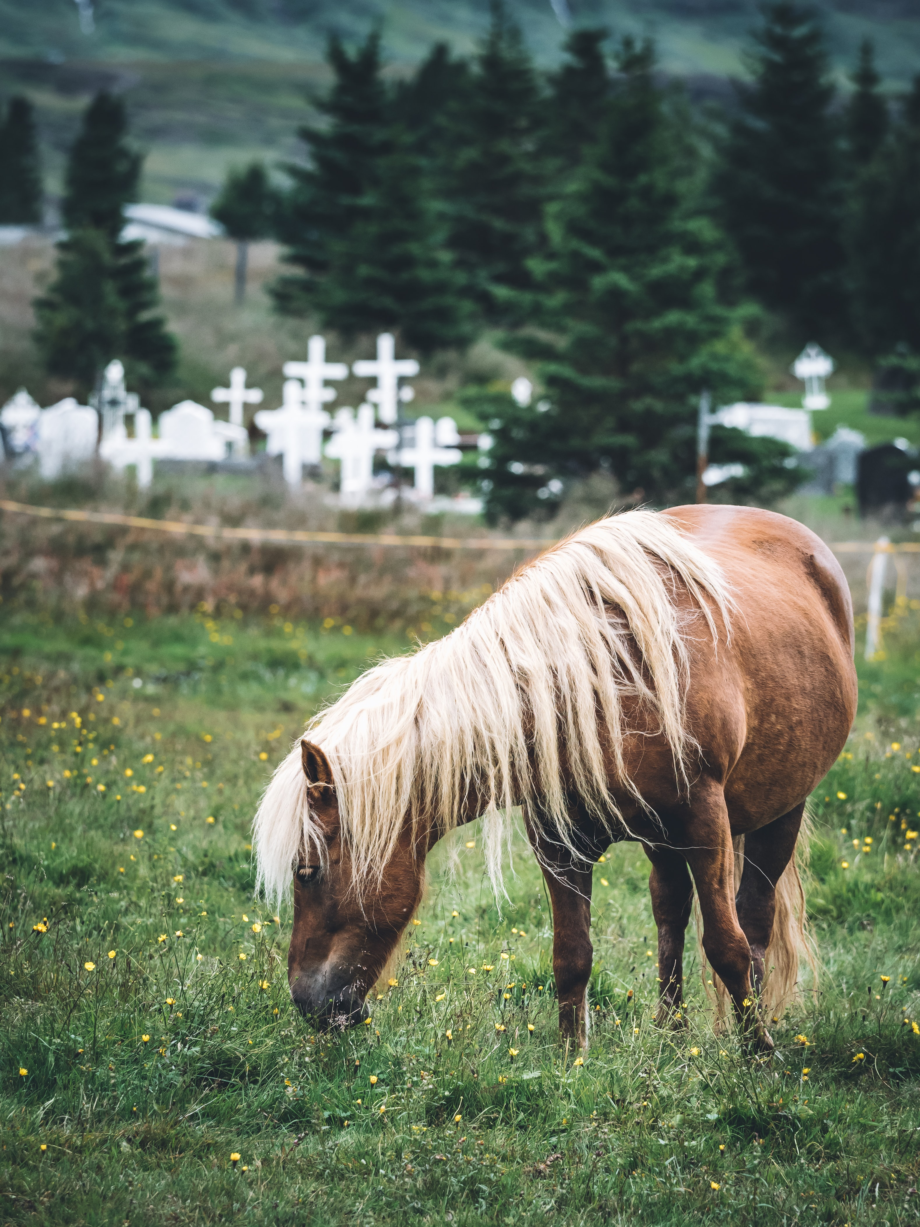 selective focus photography of brown horse near cemetery