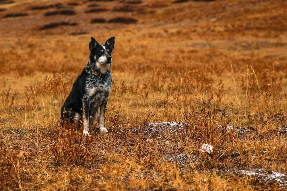 short-coated black dog sitting on grass