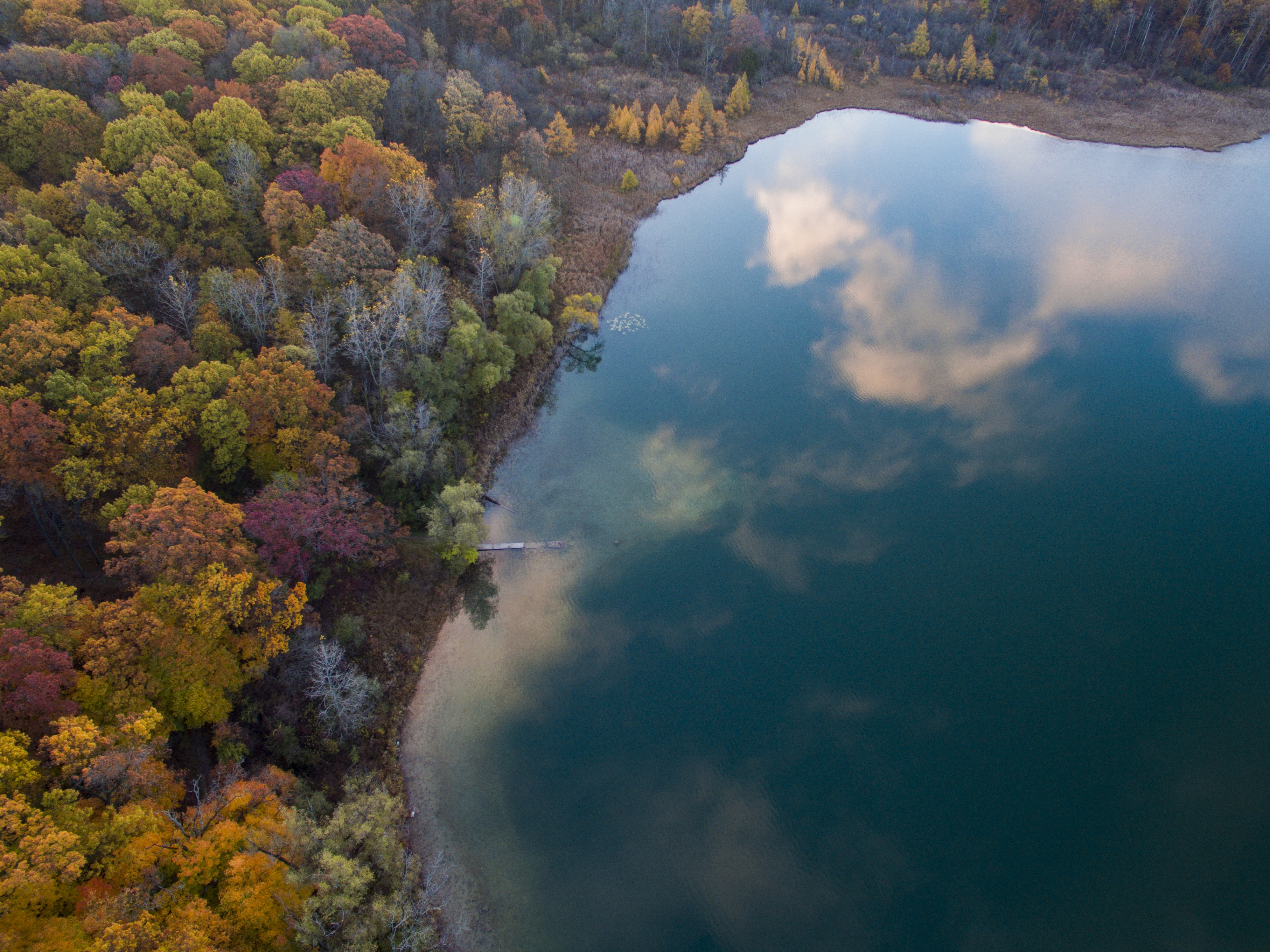 aerial photography of tree near body of water