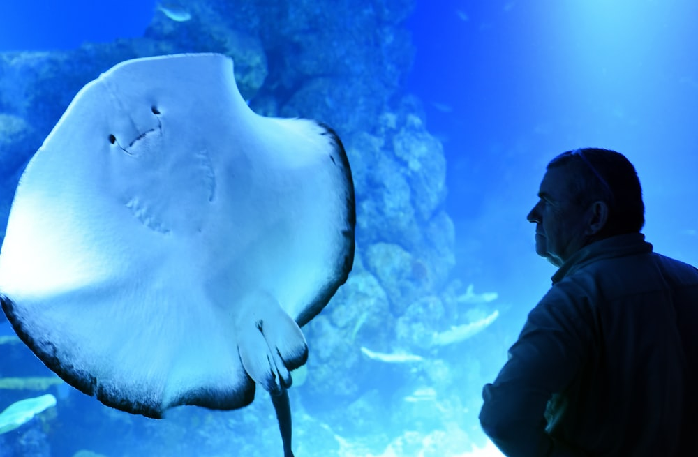 man standing near manta ray sea creature