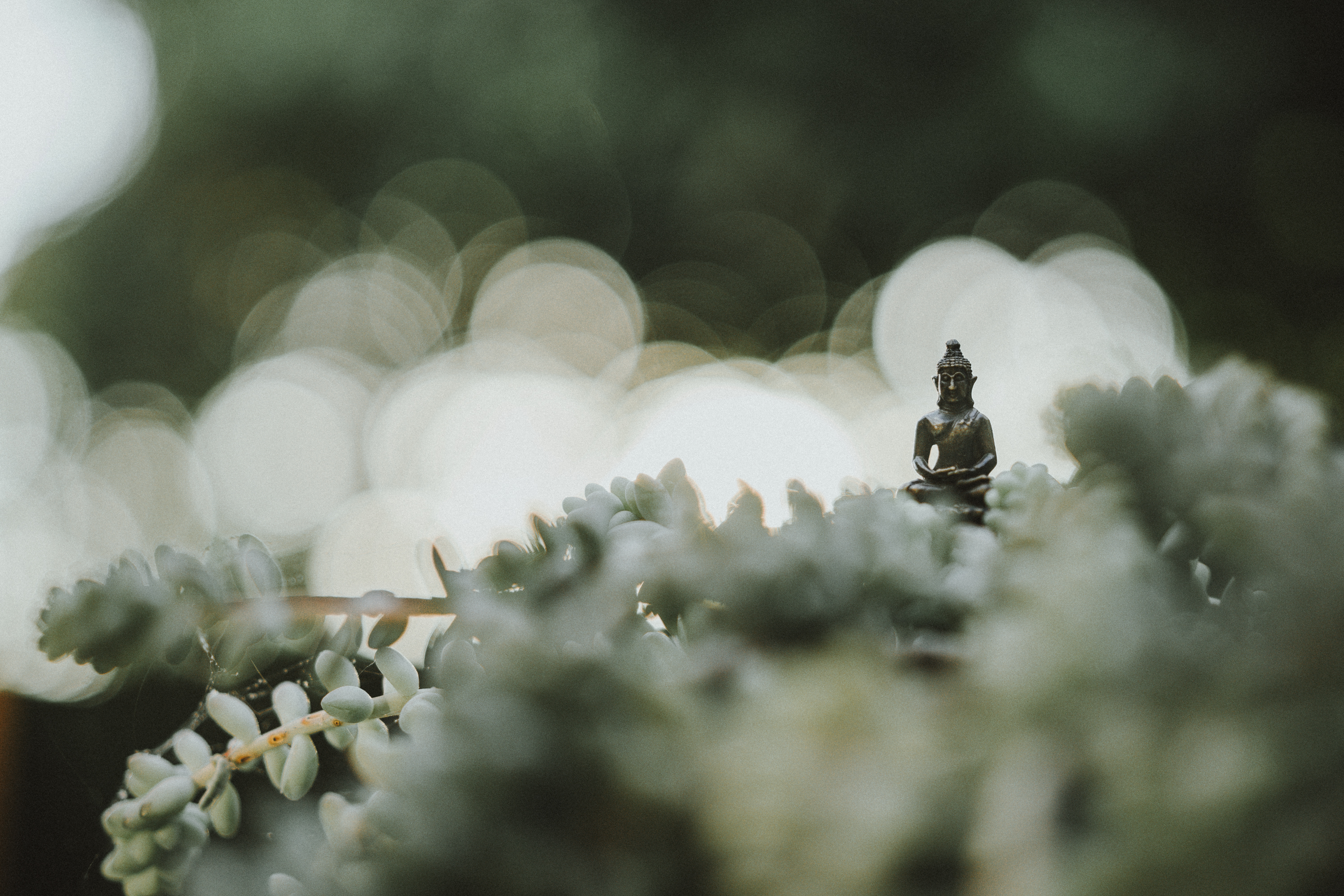 Meditation and Awareness as Tools to Explore the Mind