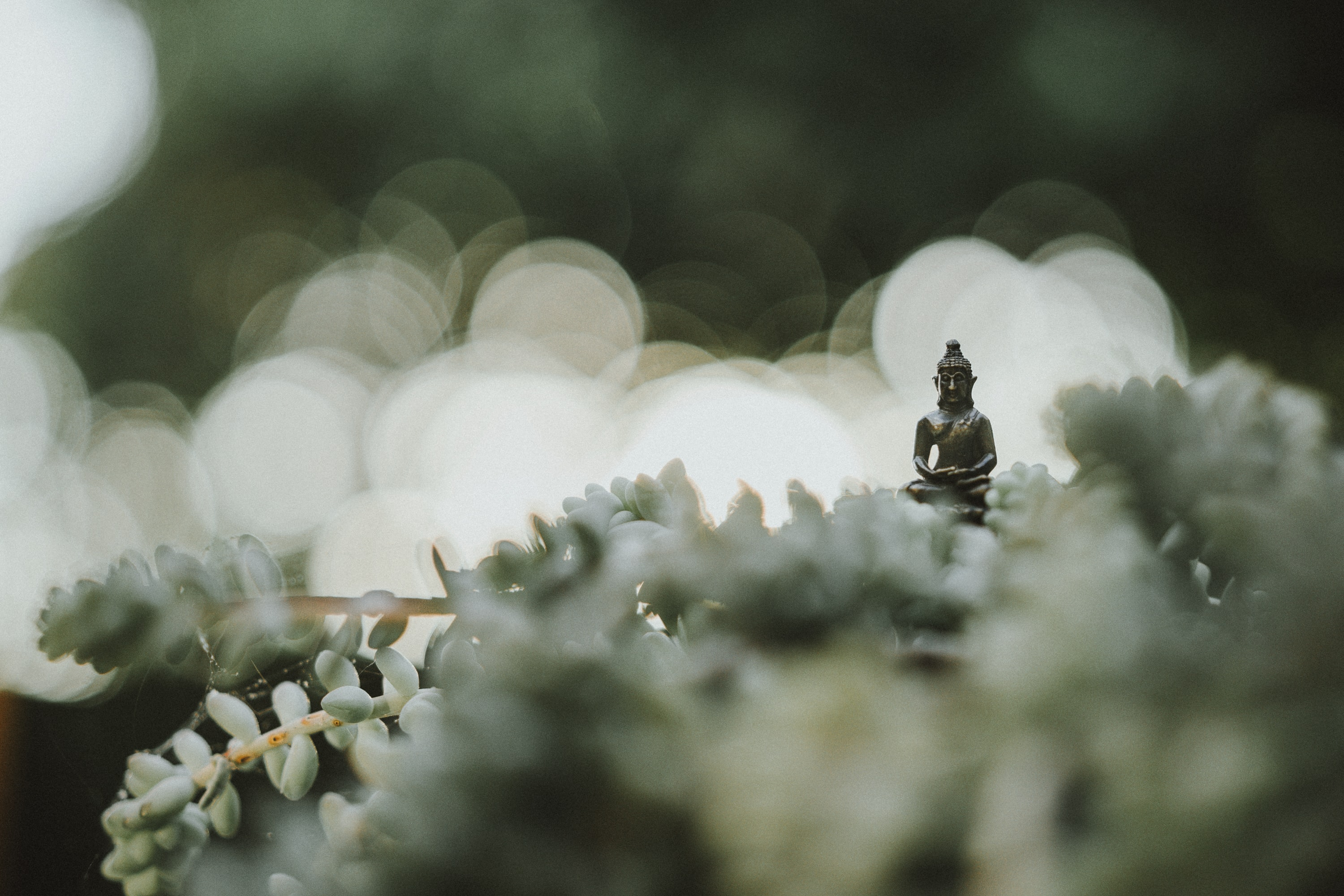 selective focus photography of Buddha statue