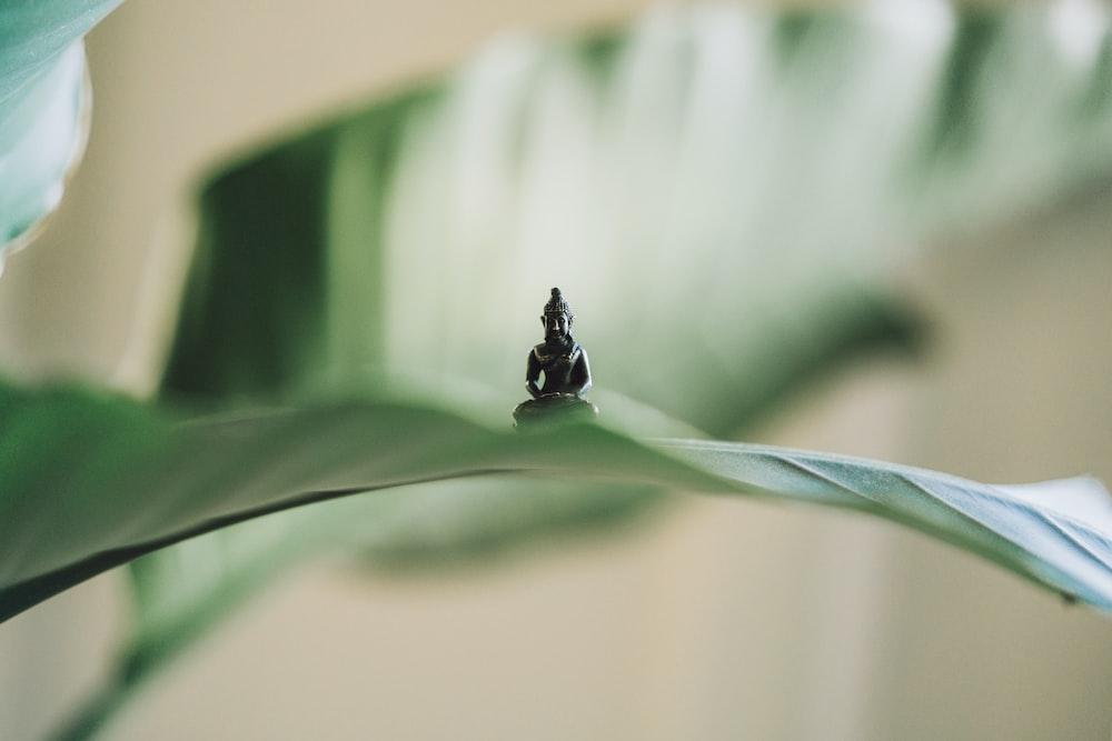 selective focus photography of black Buddha figurine on green leaf