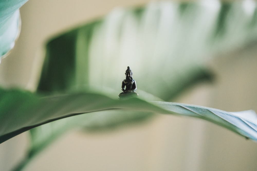 selective focus photography of black Buddha figurine on green leaf