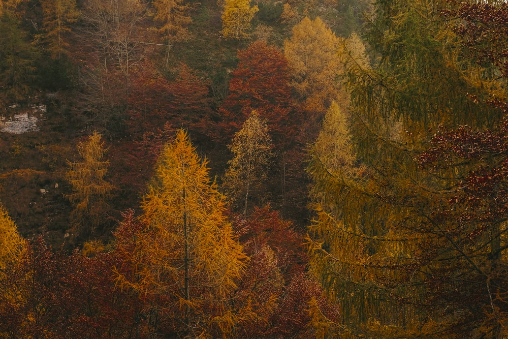 in distant photo of tall trees