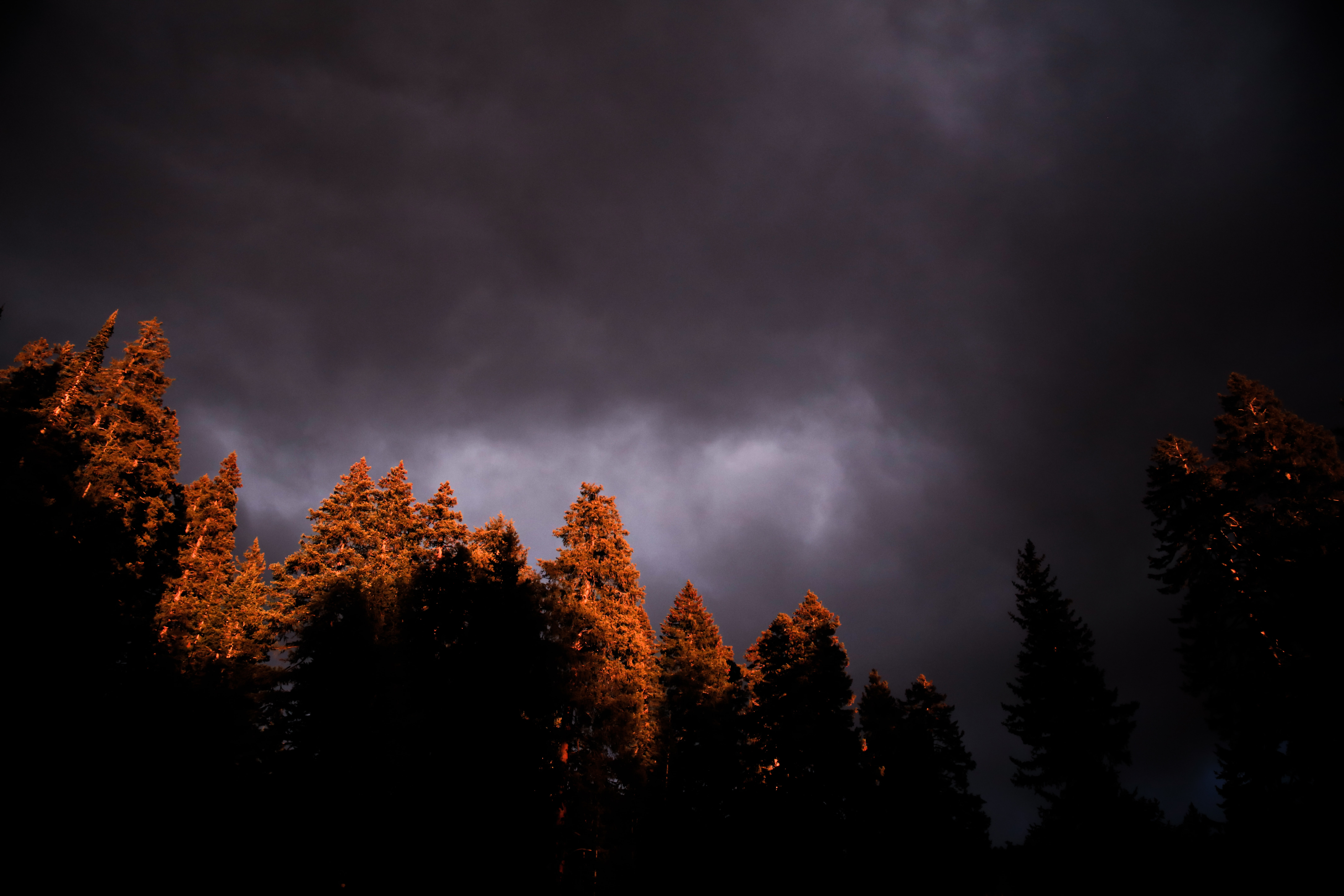 trees under black clouds