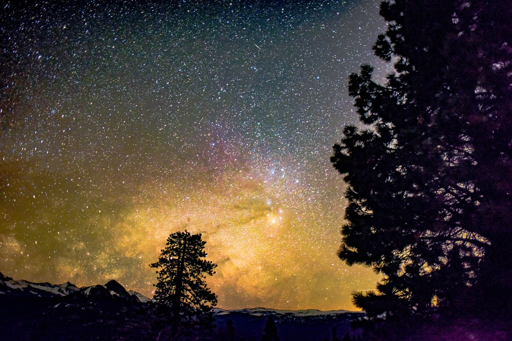 silhouette of tree under starry sky at night
