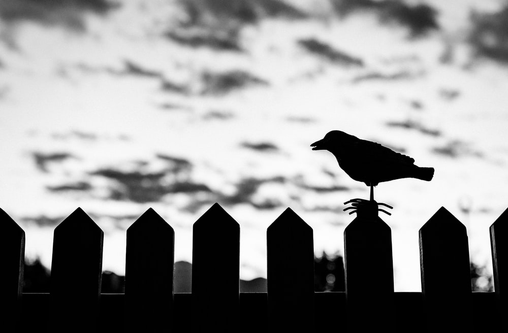 silhouette of bird on fence on focus photo