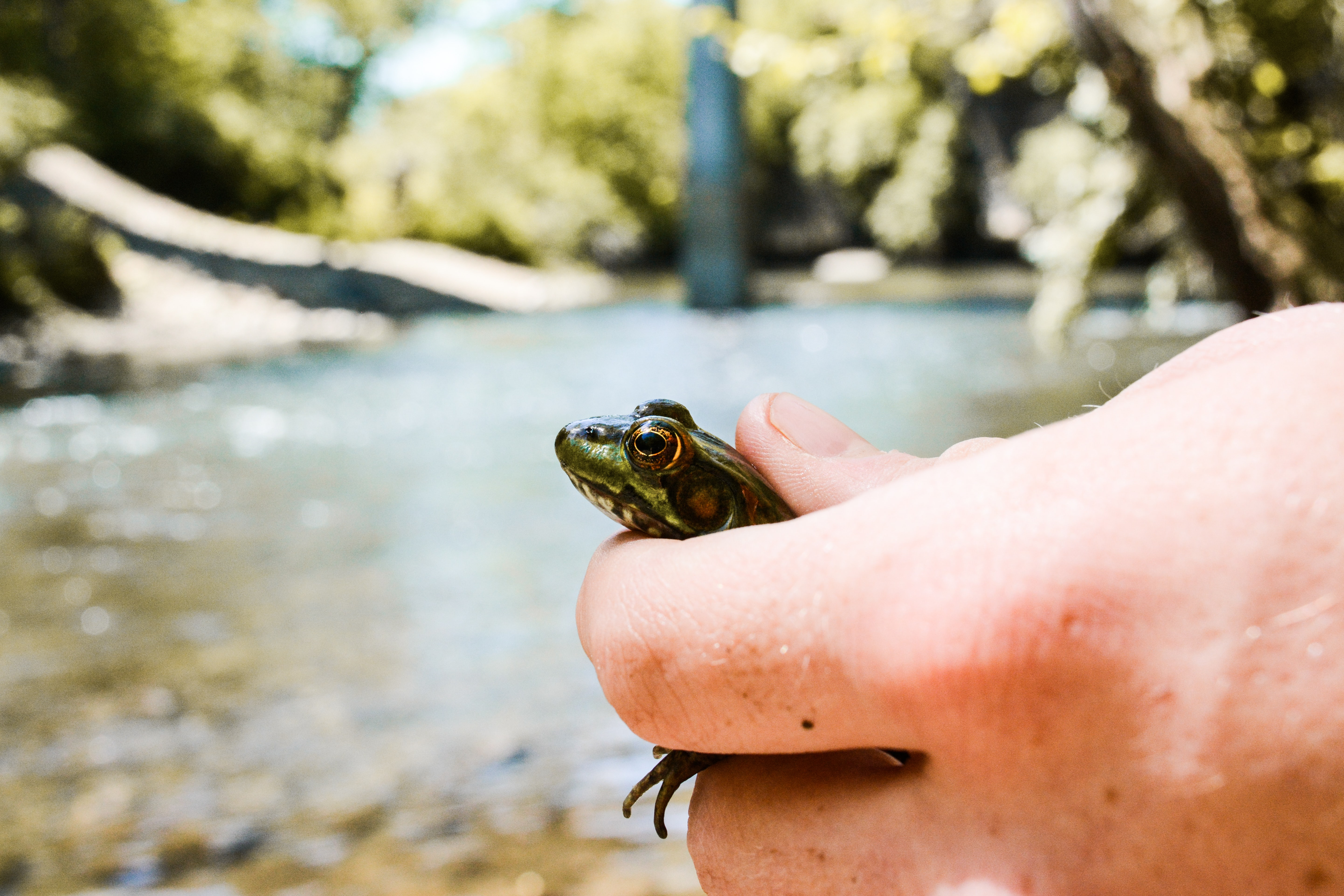 person holding green frog
