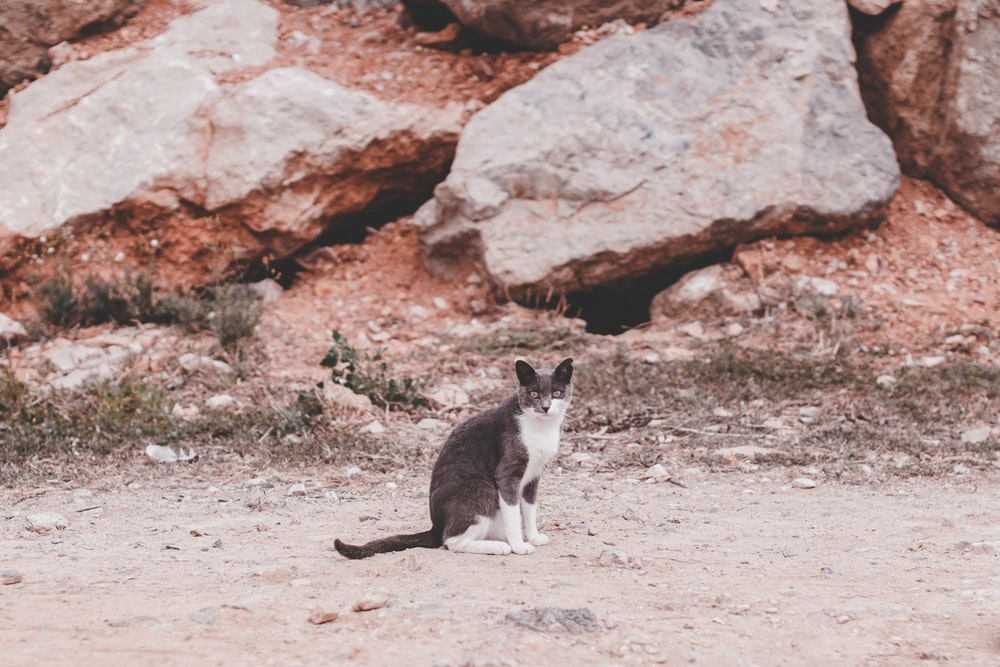 black and white cat sitting in front of grey and brown rock boulders during daytime