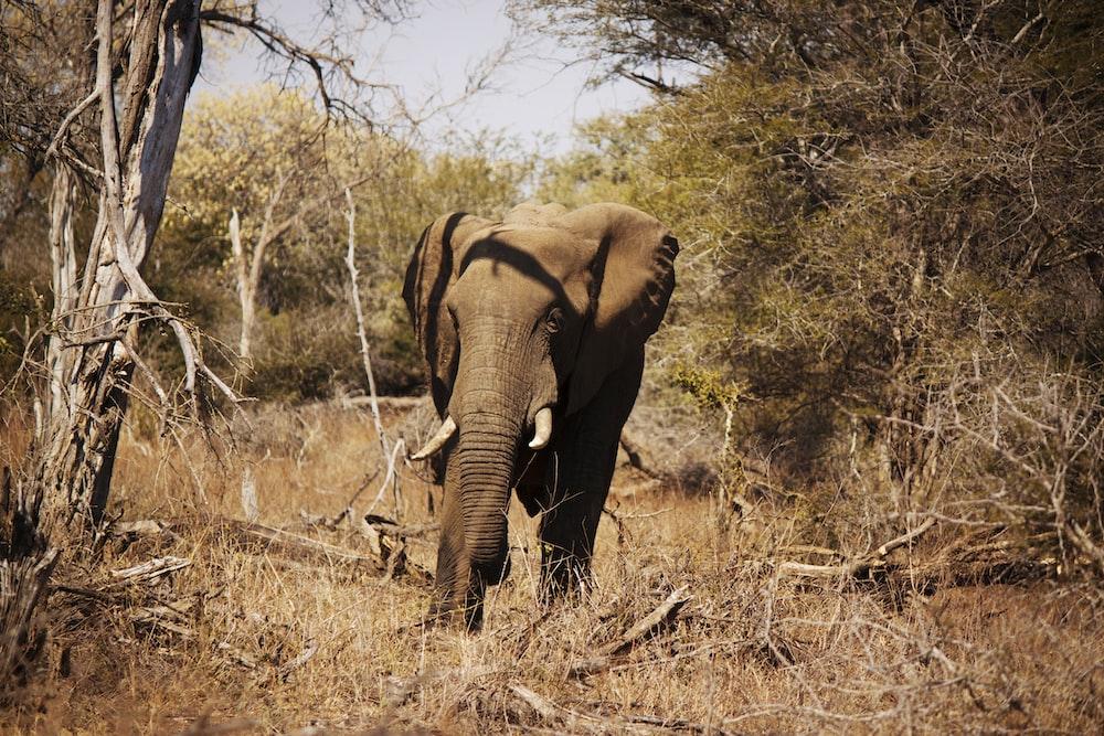 brown elephant near tree