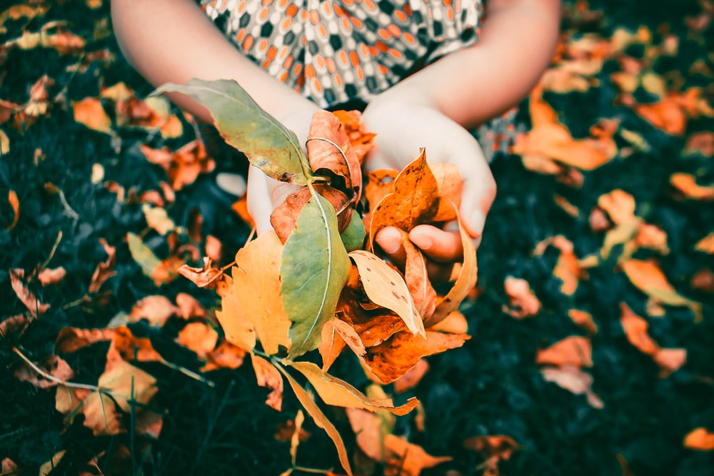 person holding leaves during daytime