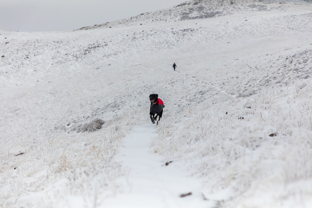 black dog running on open field covered with snow at winter