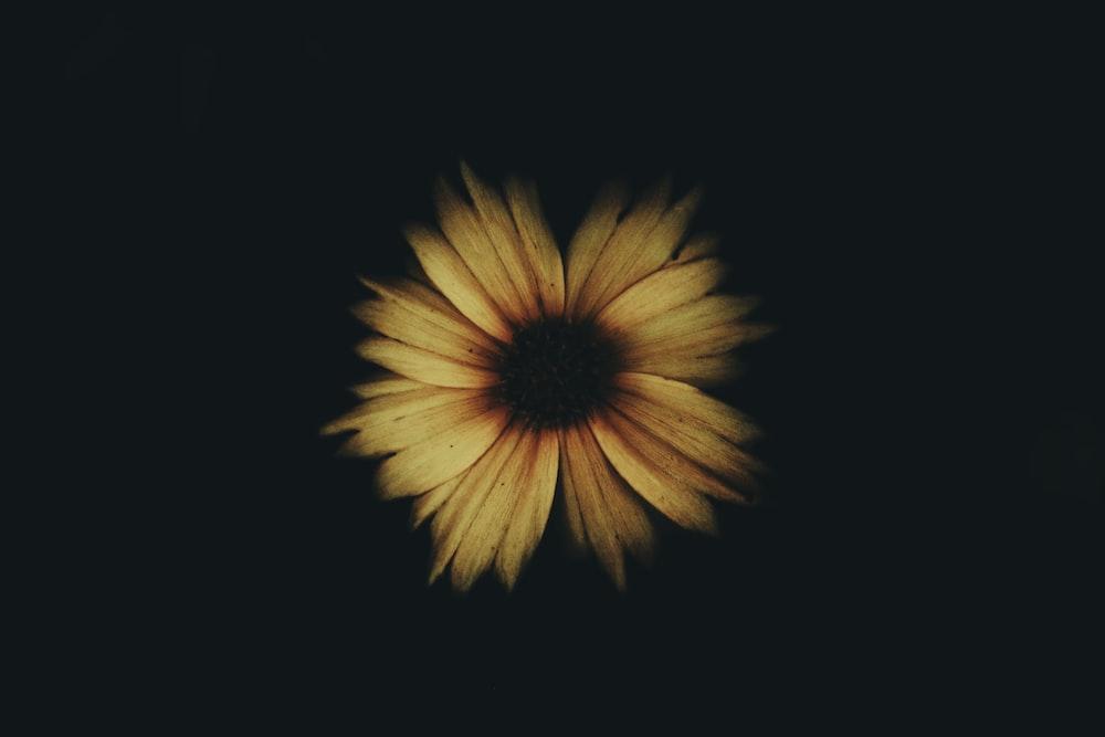 Yellow Flower With Black Background Photo Free Flower Image On Unsplash