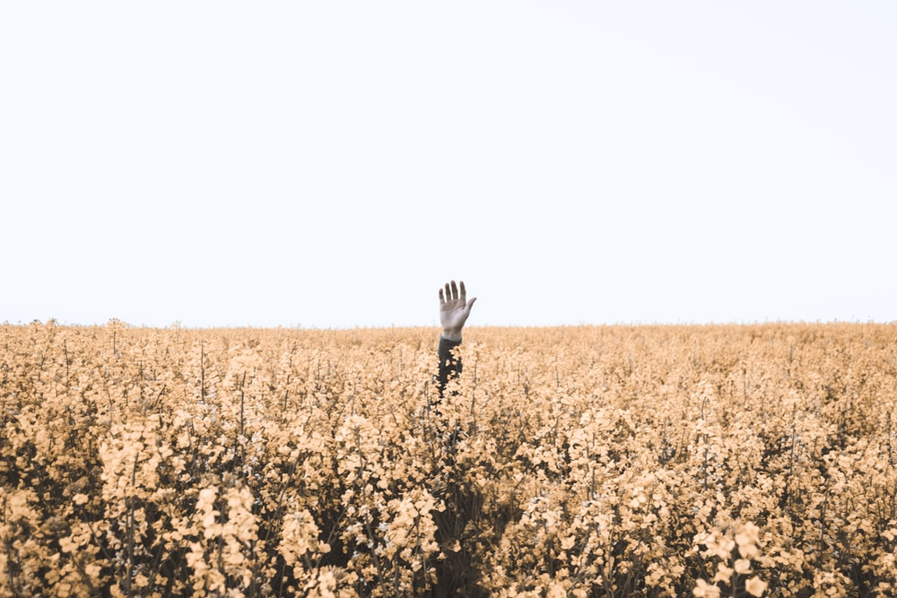 person's hand over brown floral field during daytime