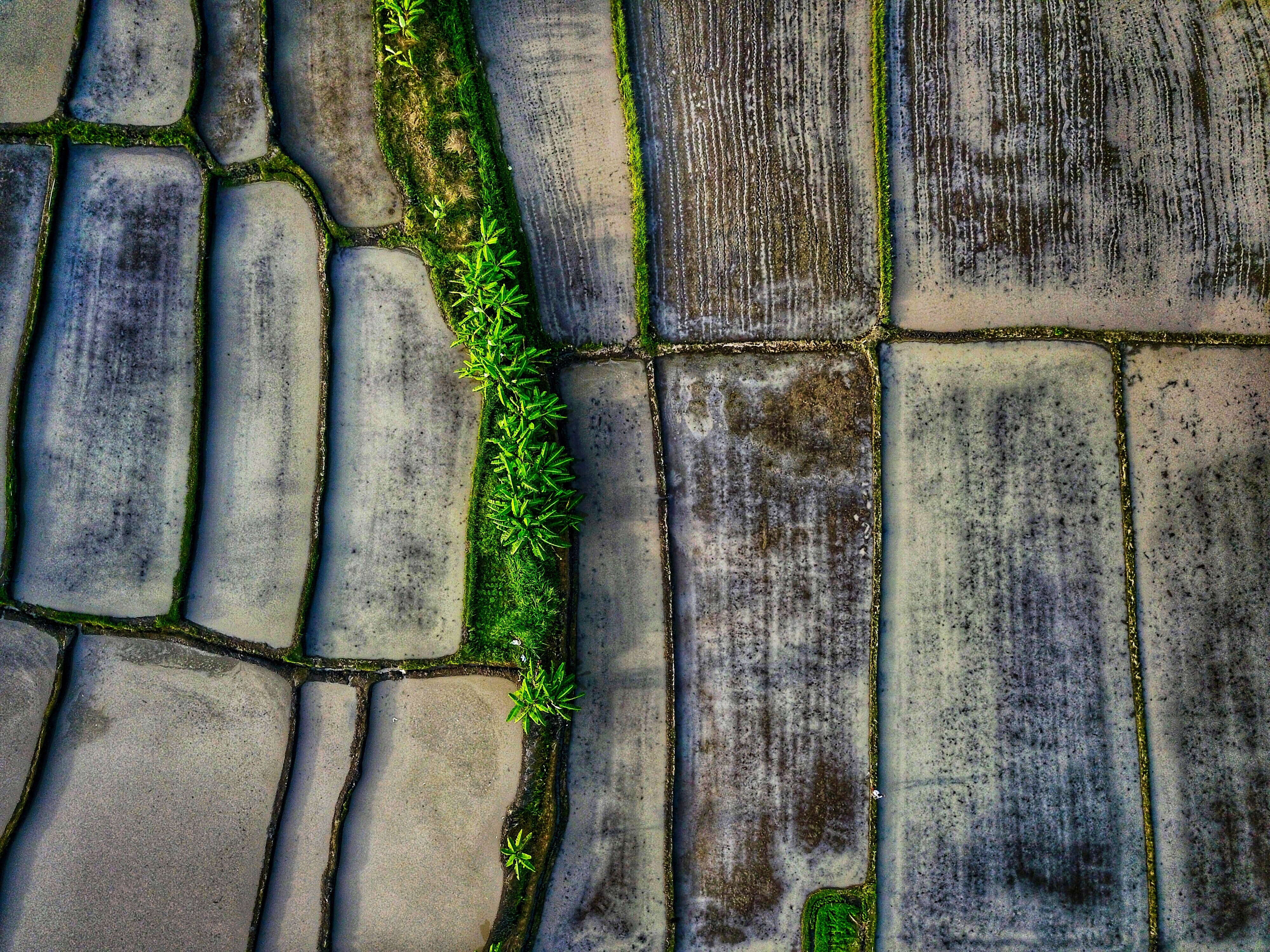 areal picture photography of empty rice field