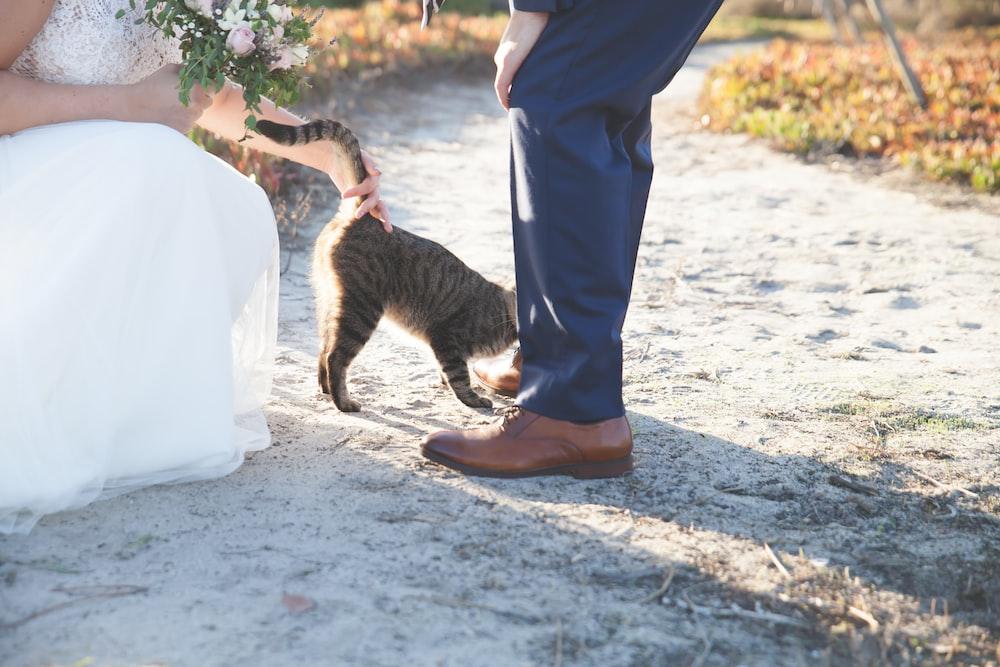 silver tabby cat near human's feet