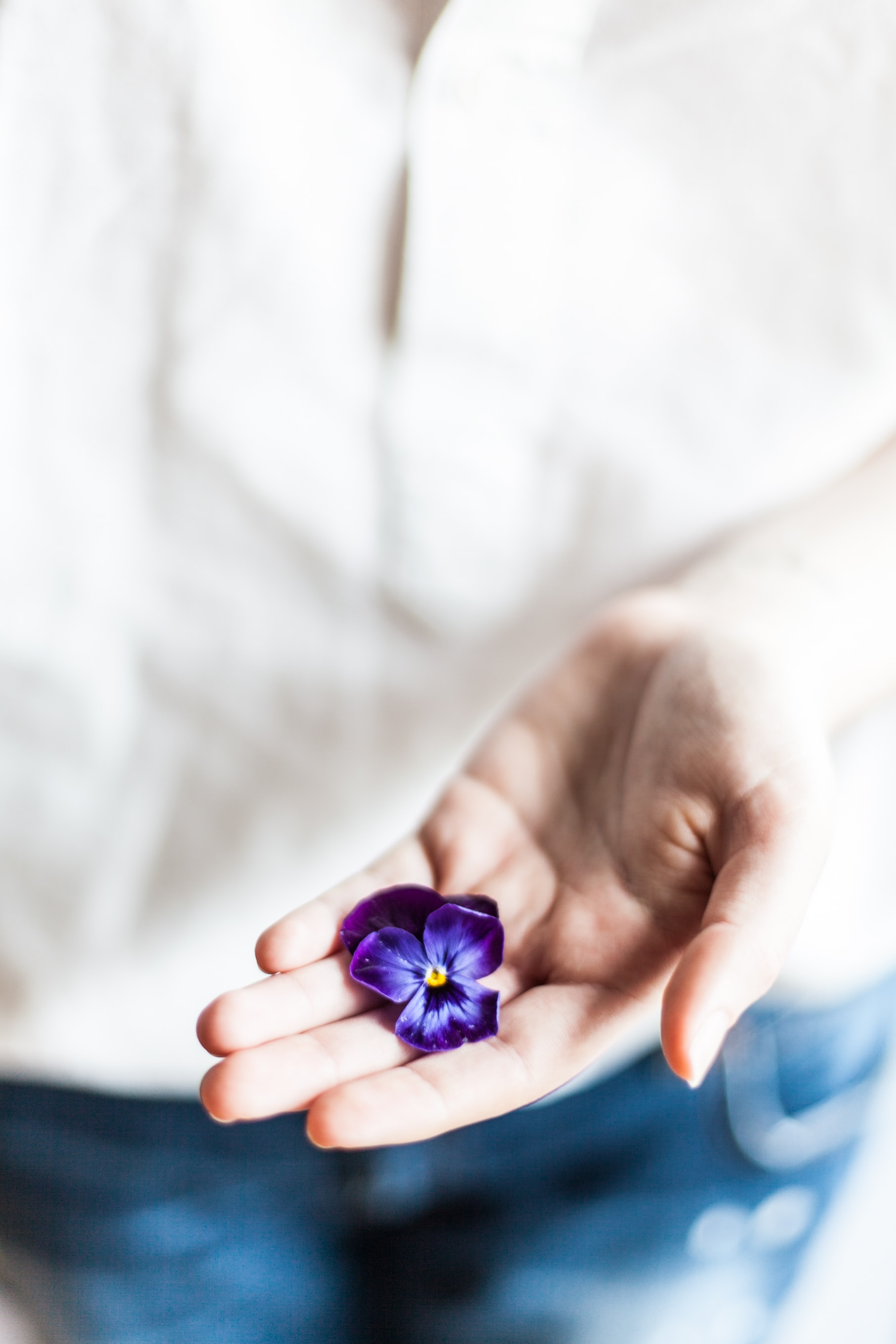 person holding purple flower