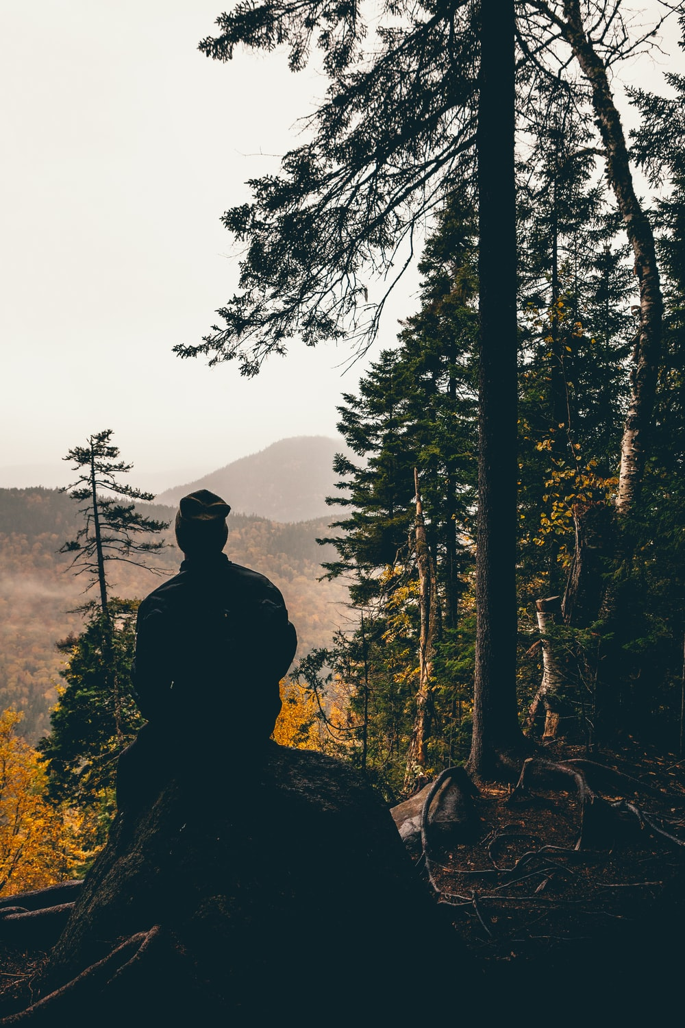 silhouette photo of man sitting on rock in front of tree
