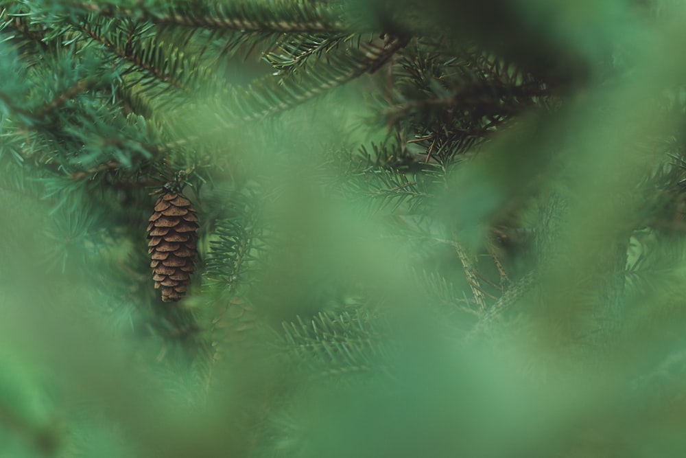 closeup photo of green pine tree