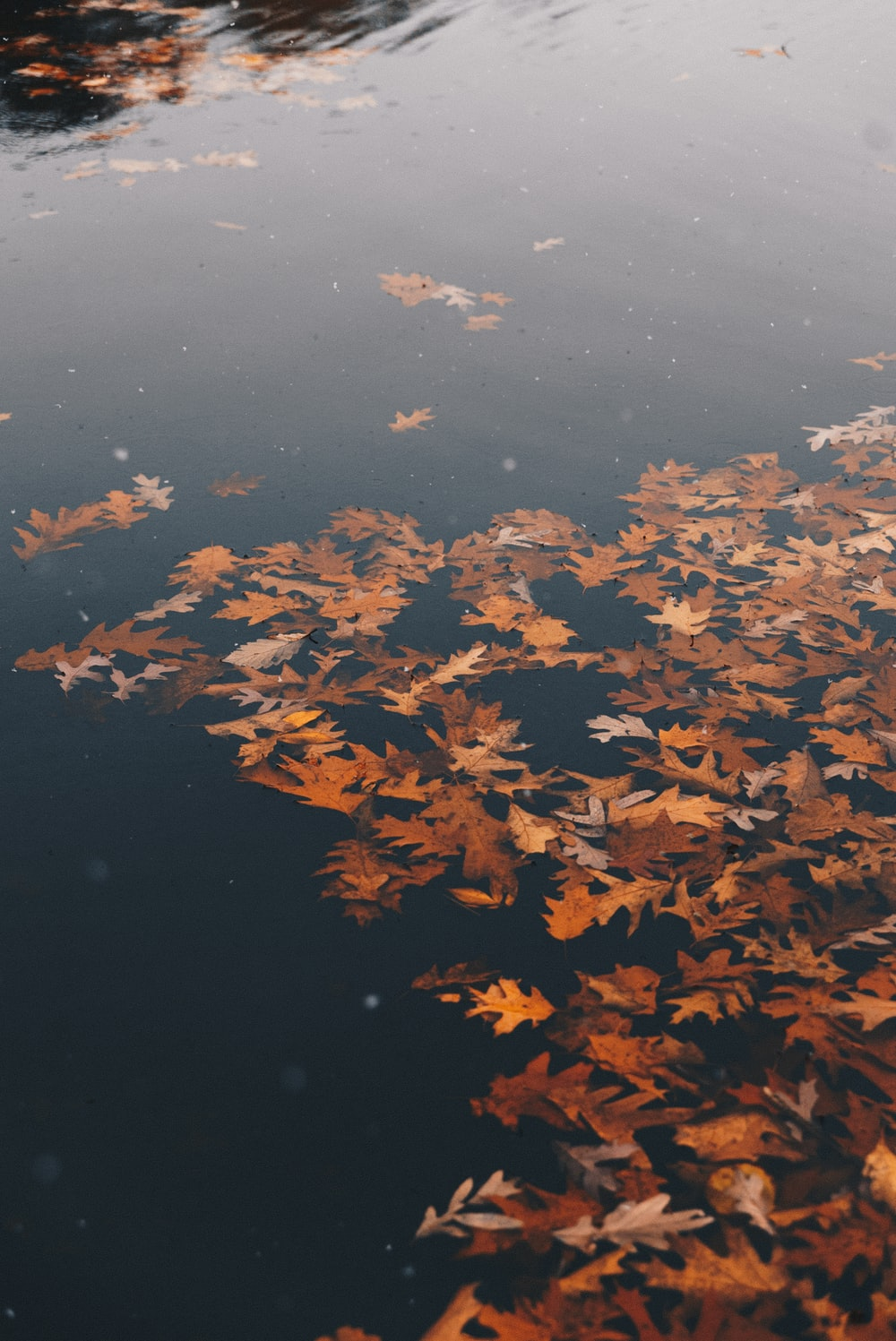 brown withered leaves on water at daytime