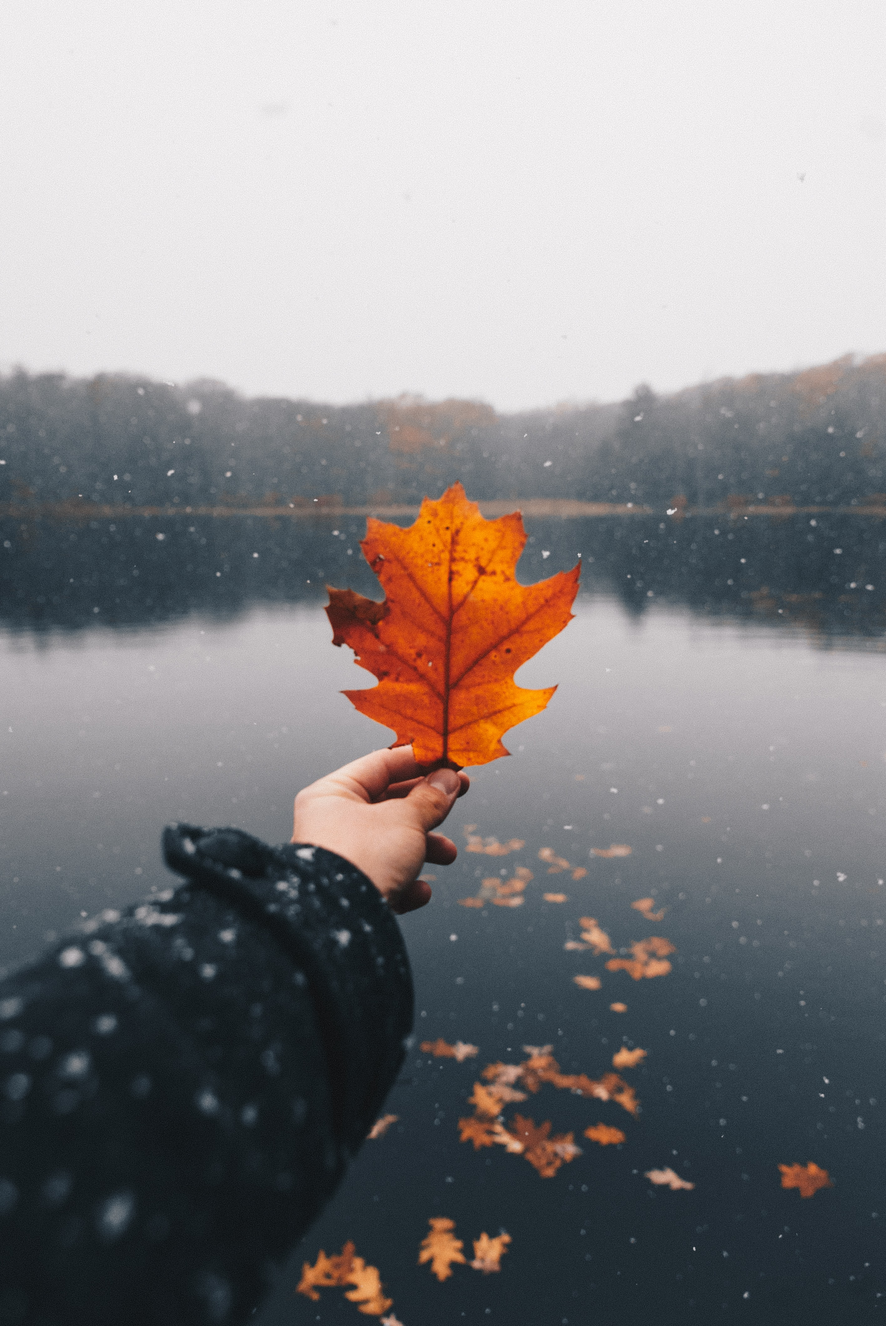 person holding brown maple leaf during daytime