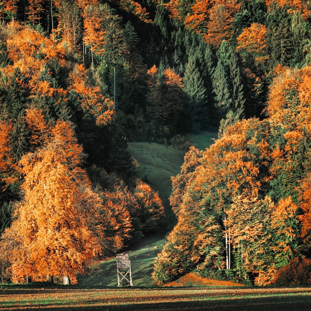 orange-and-green leafed tree in forest