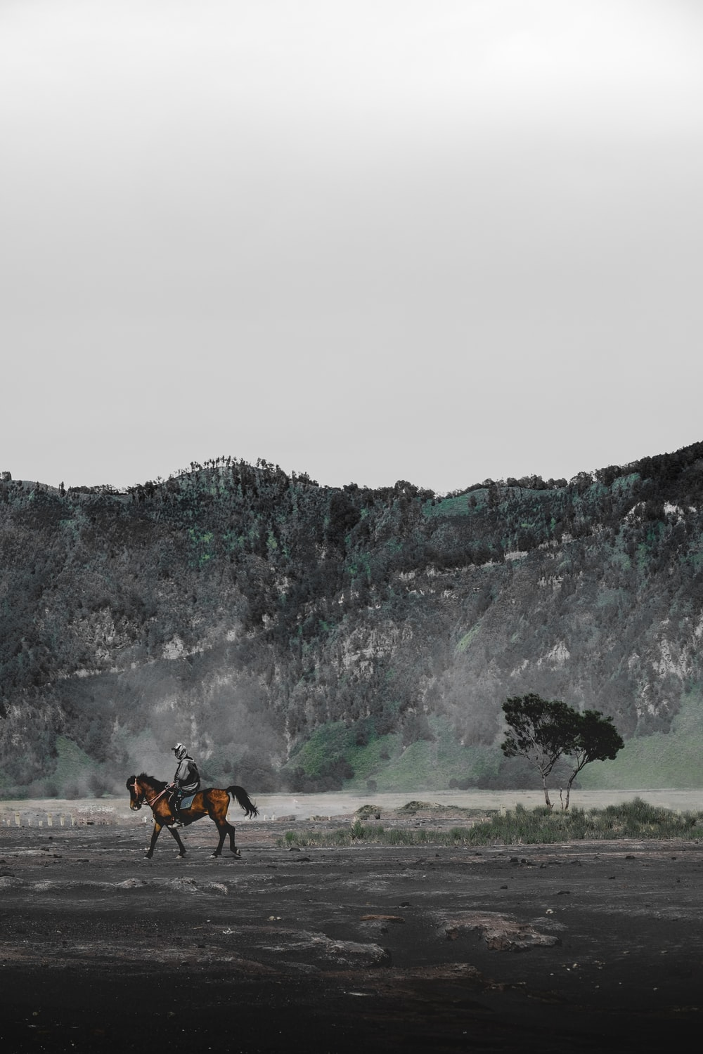 person riding on horse during daytime
