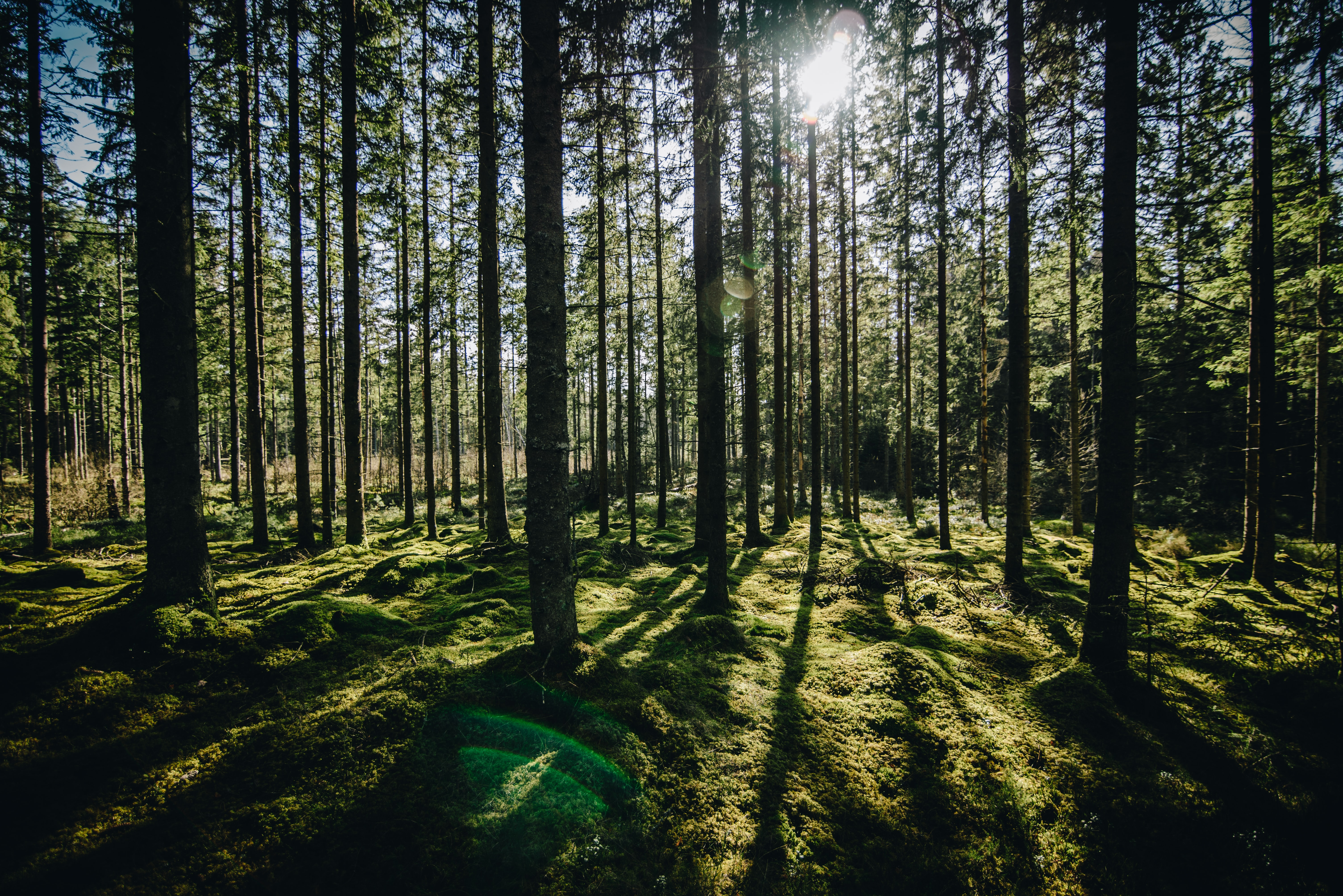 forest during daytime