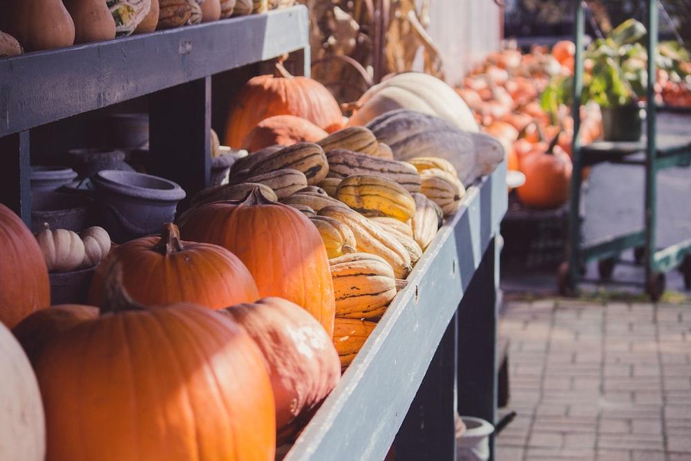 closeup photo of pumpkins inside gray display rack