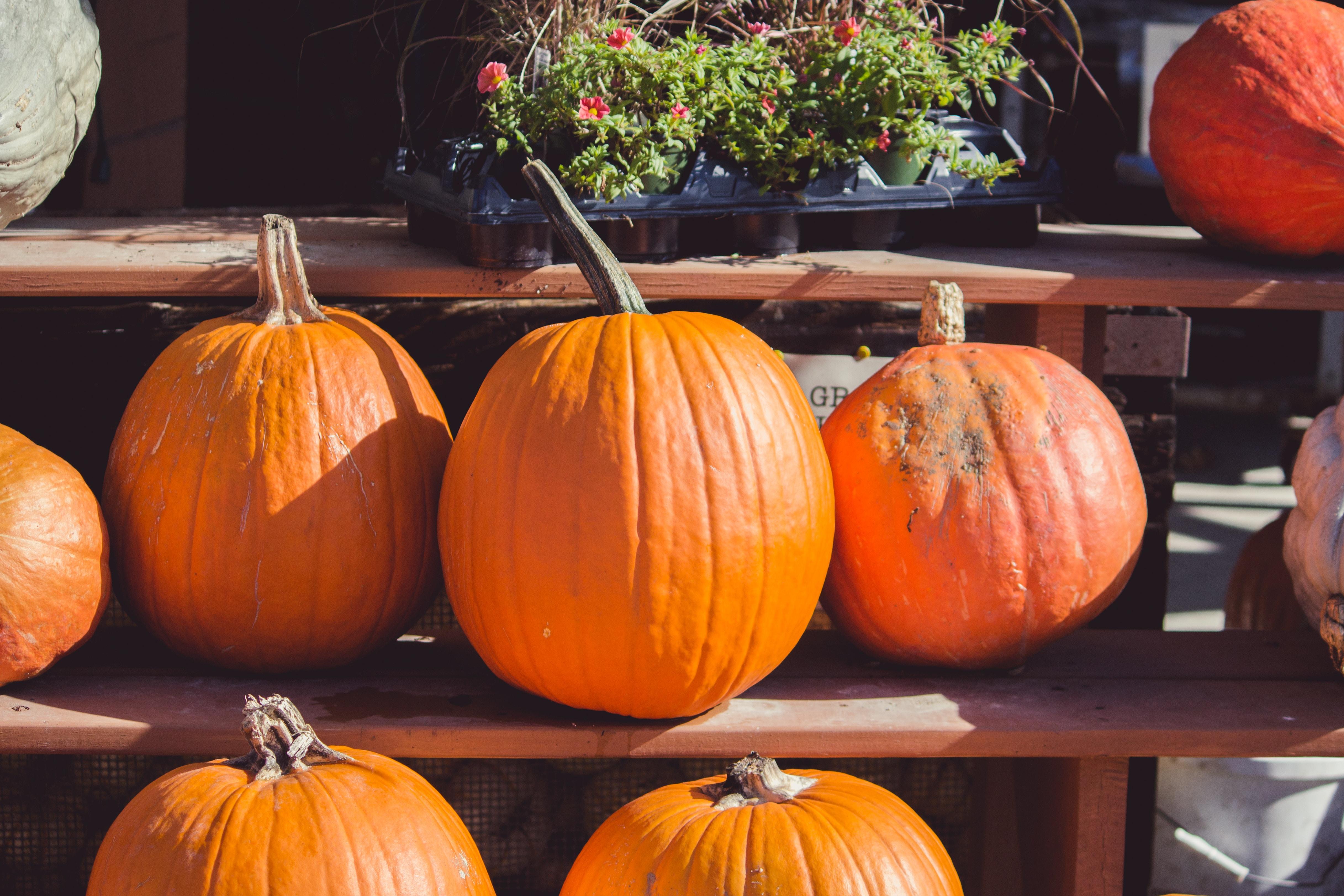 several pumpkins on brown shelf