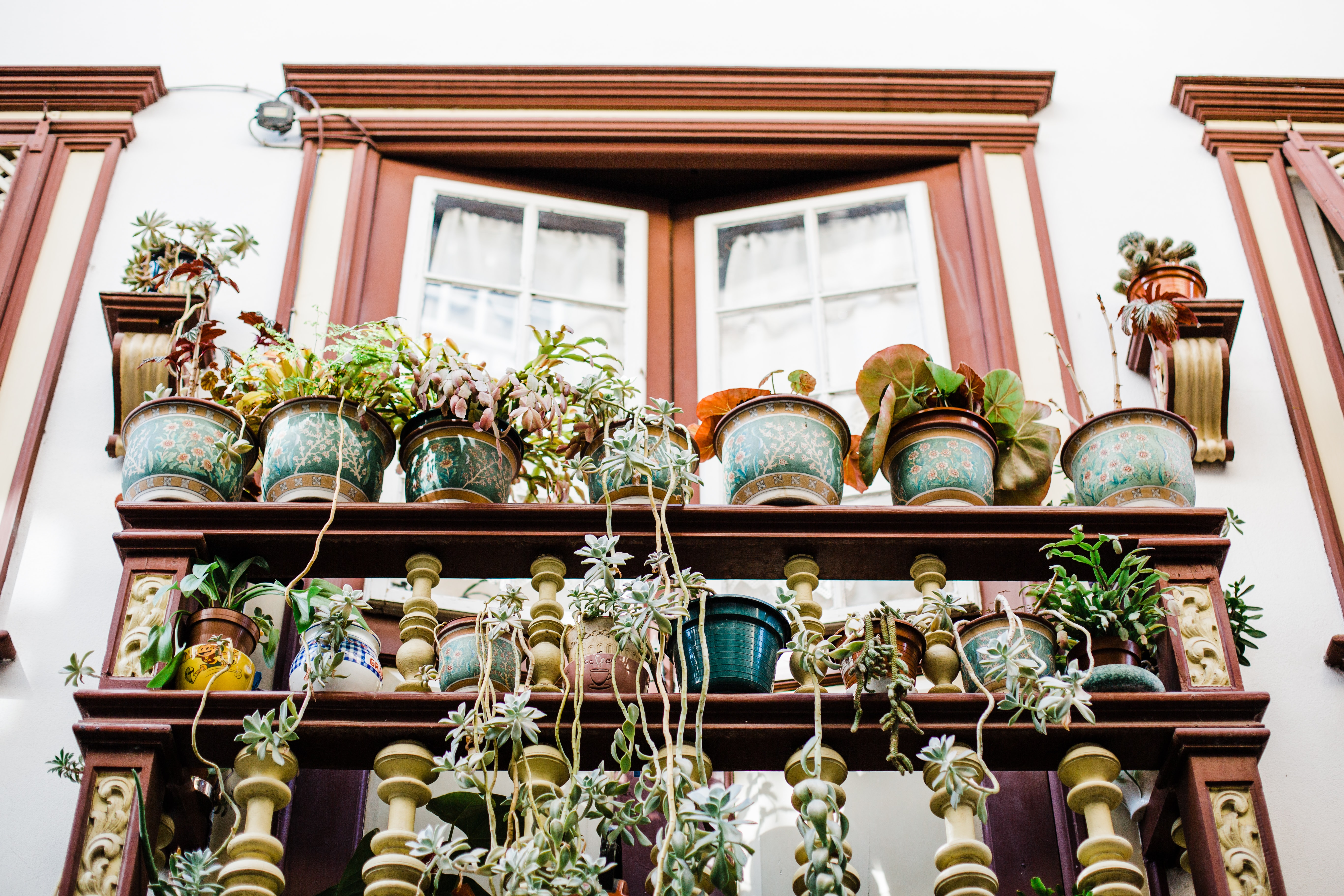 My First Garden: Why you should be container gardening right now