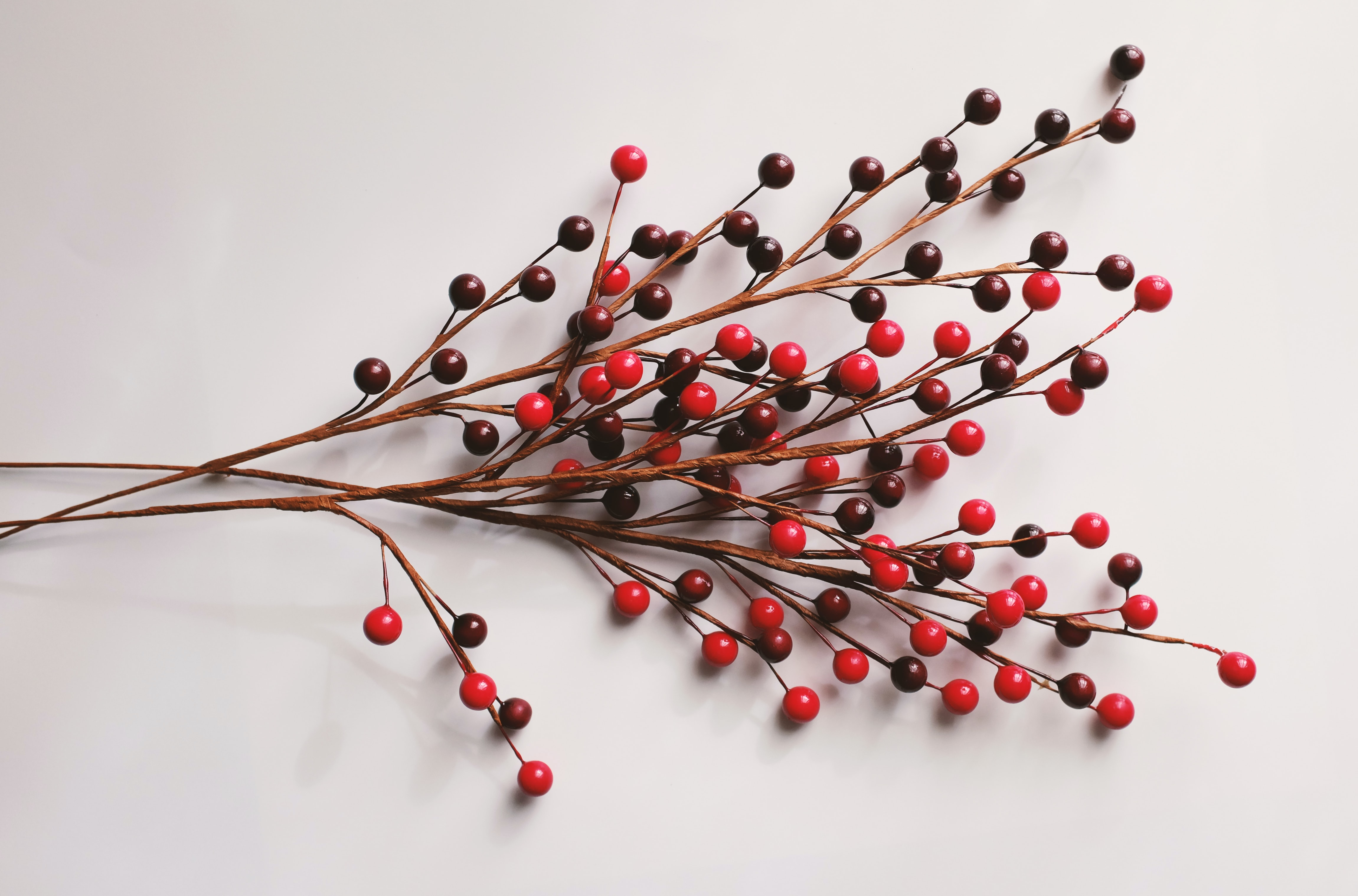 red and brown twigs