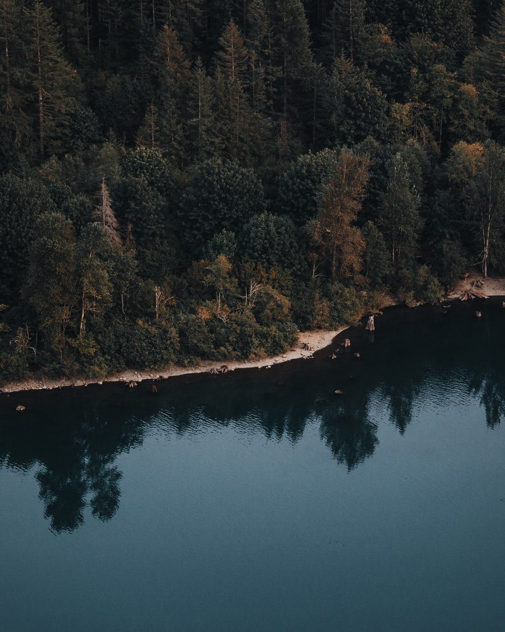 aerial photo of green forest near body of water during daytime