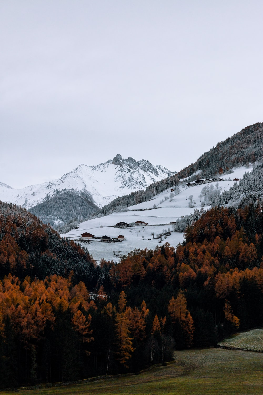 brown trees near snowy mountain