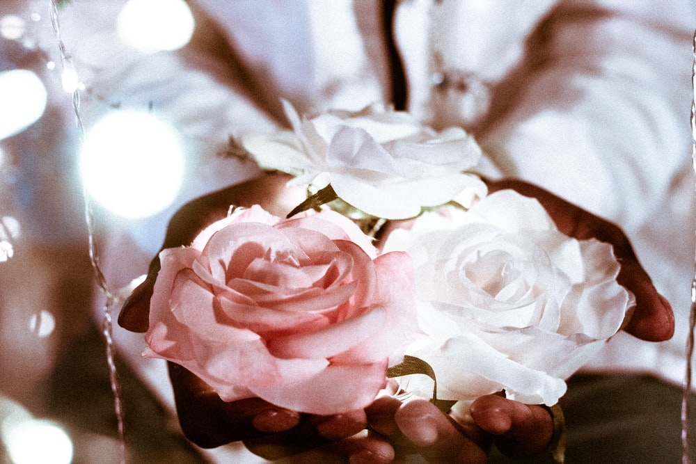 person holding rose flowers