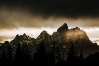 silhouette of trees and mountain during daytime