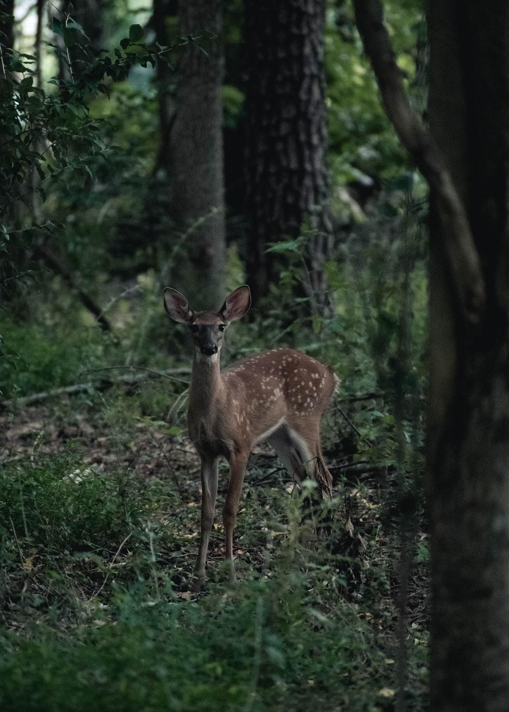 brown deer on green plants