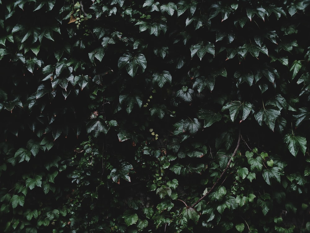 green leaf plant at daytime
