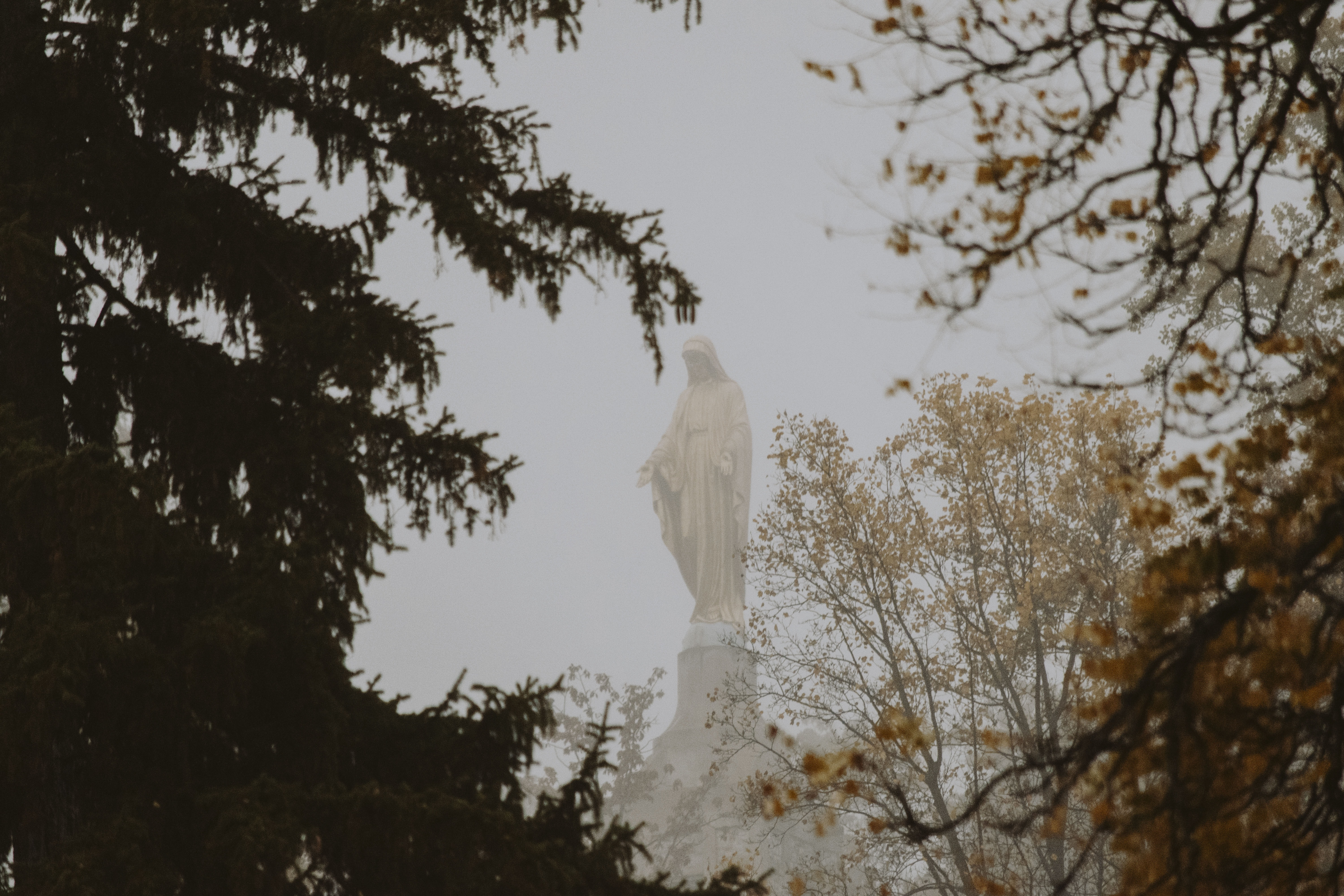 Virgin Mary statue on other side of tree during daytime