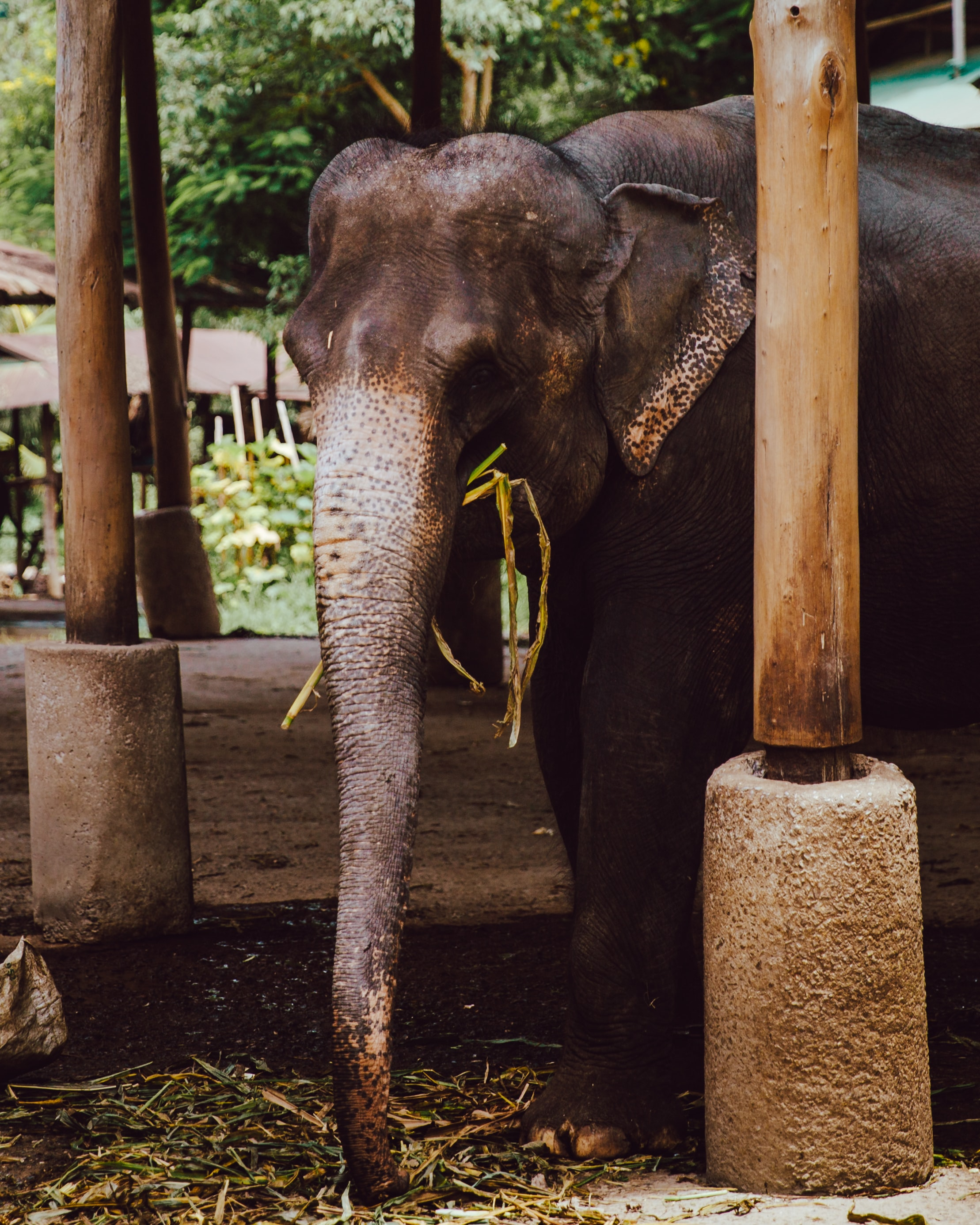 brown elephant near wooden pillar