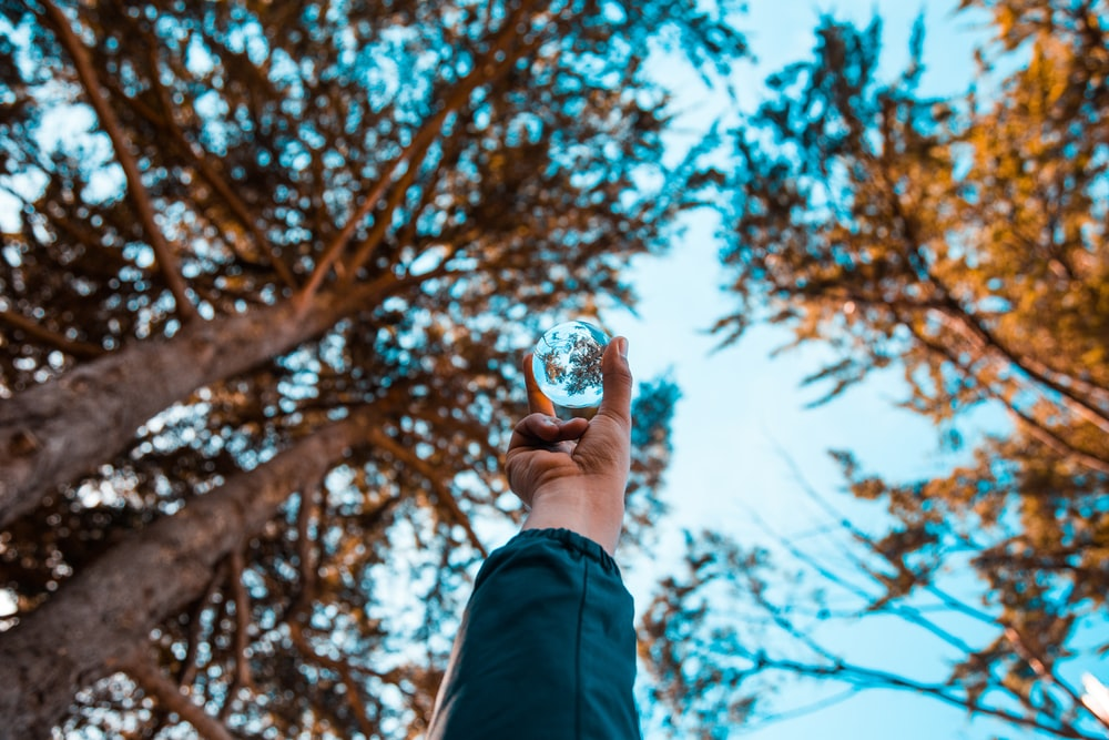 person holding glass ball near brown trees