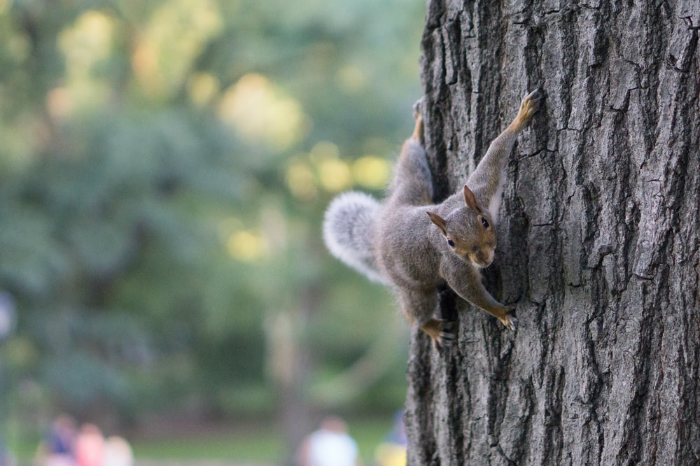 squirrel at tree trunk