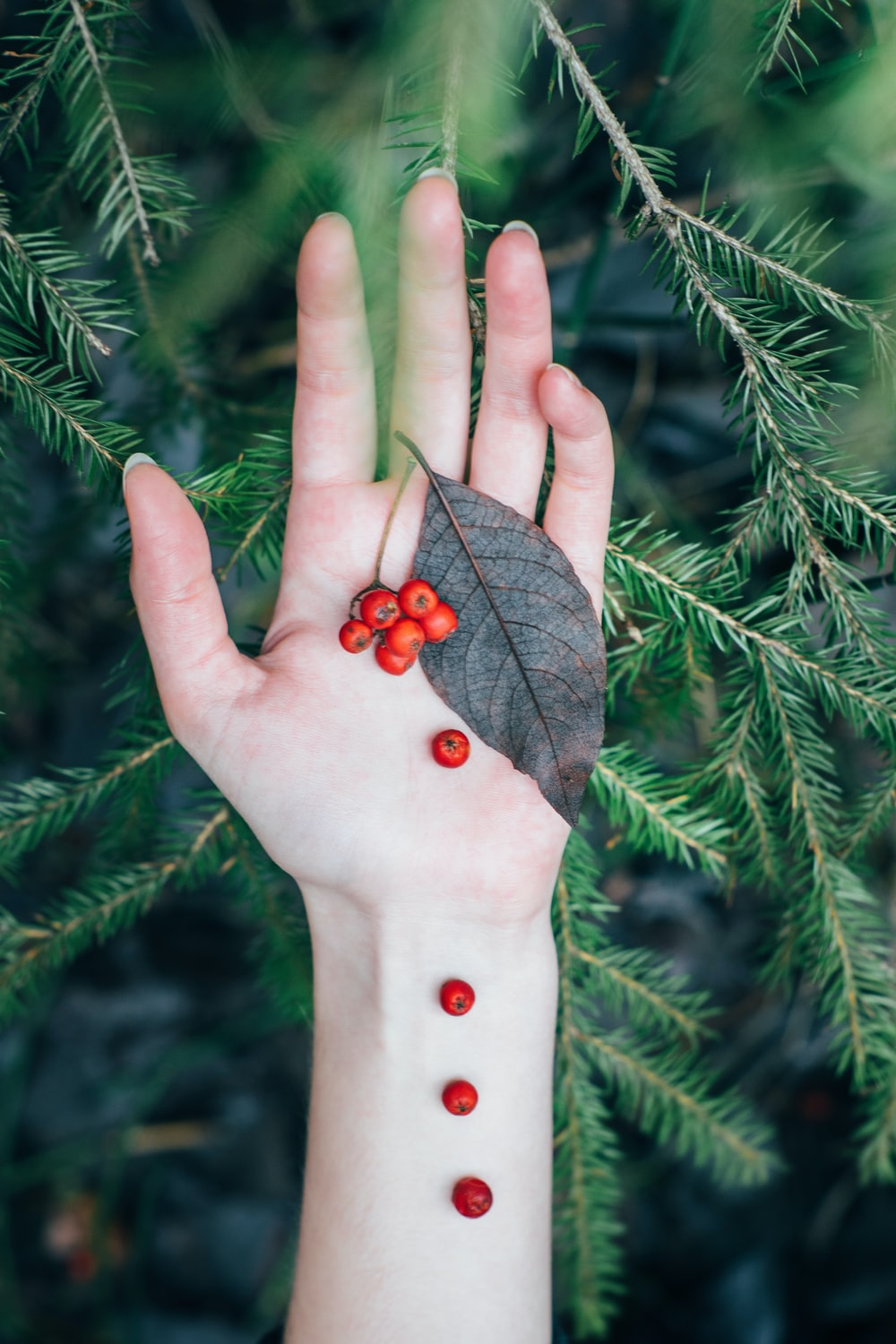 person holding red fruits