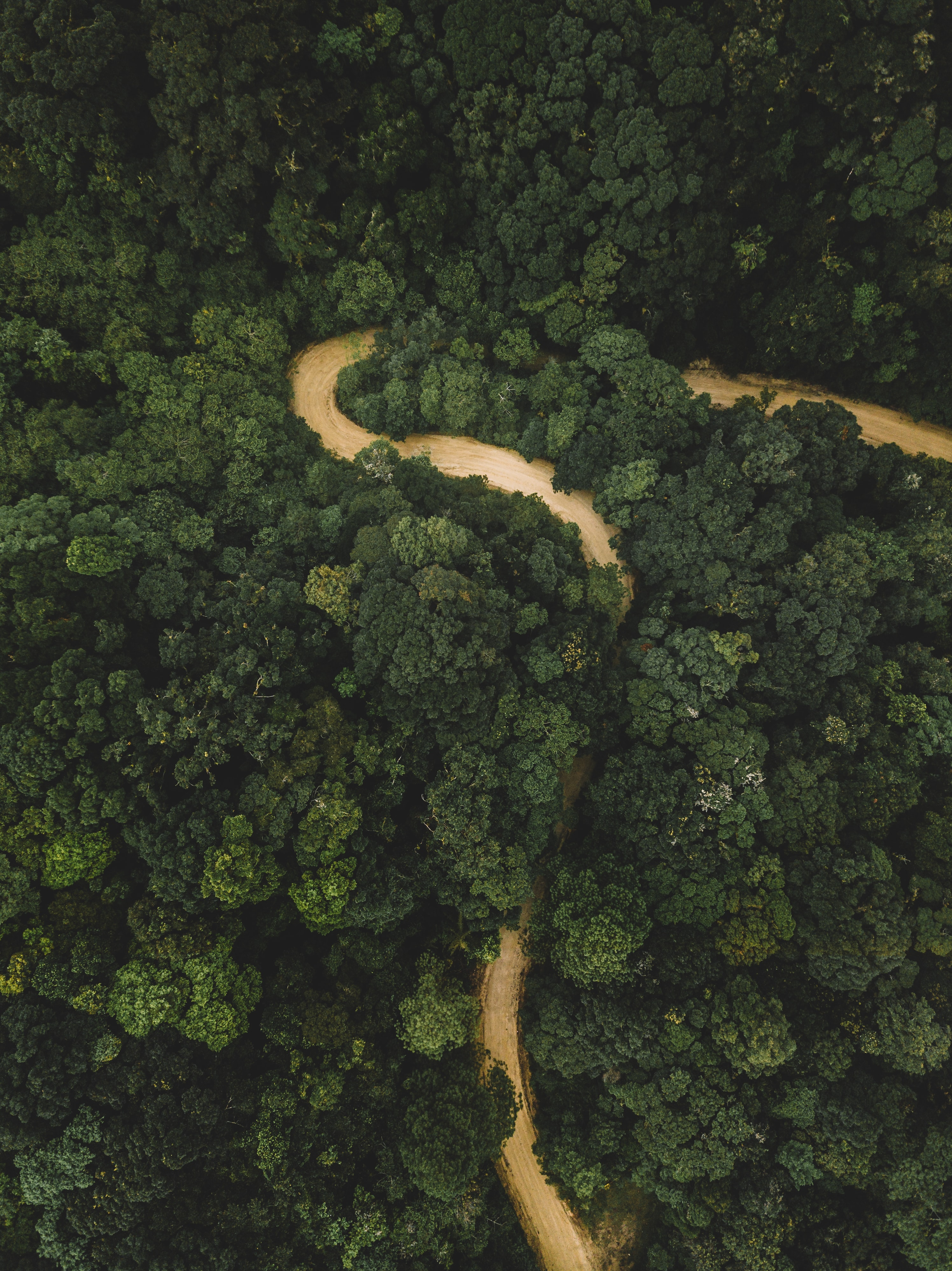 aerial photography of body of water surrounded by trees