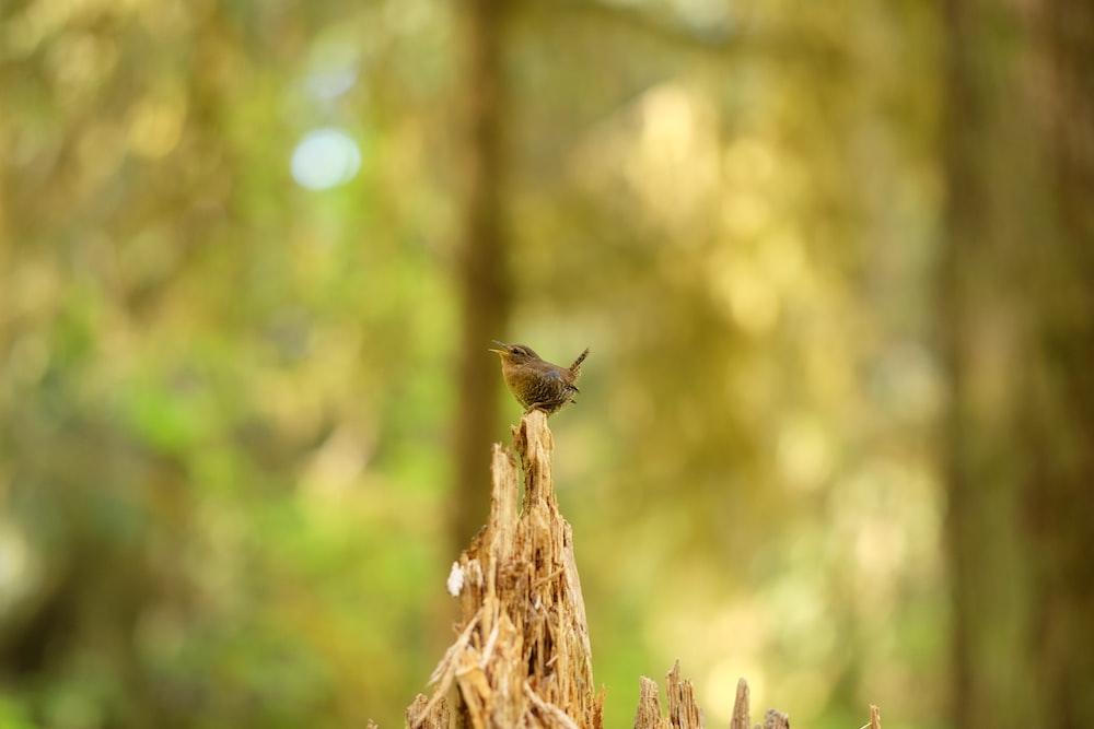 bird perched on tree