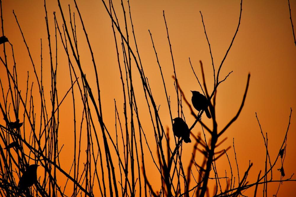 silhouette of bird on stick