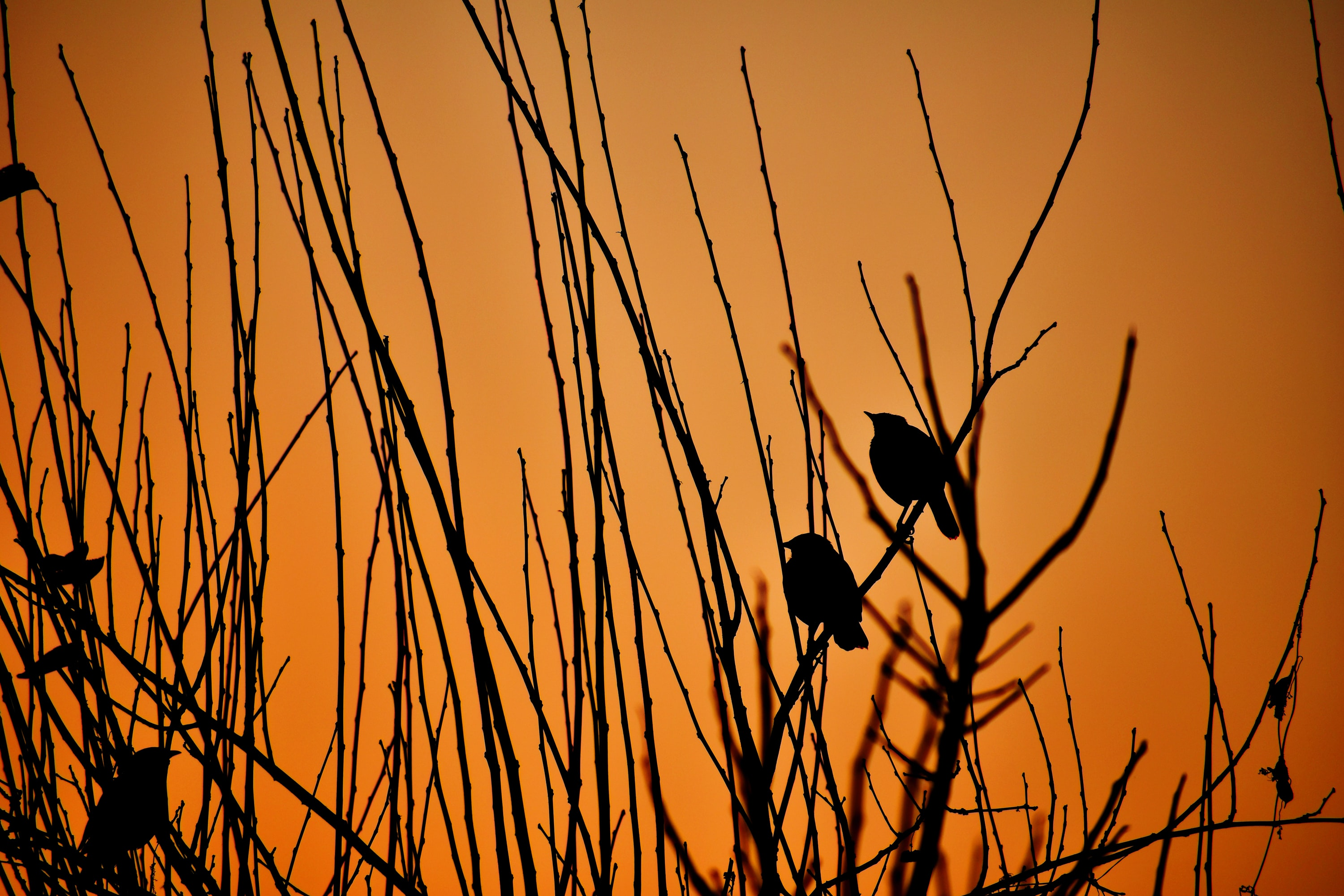 silhouette of bird on stick