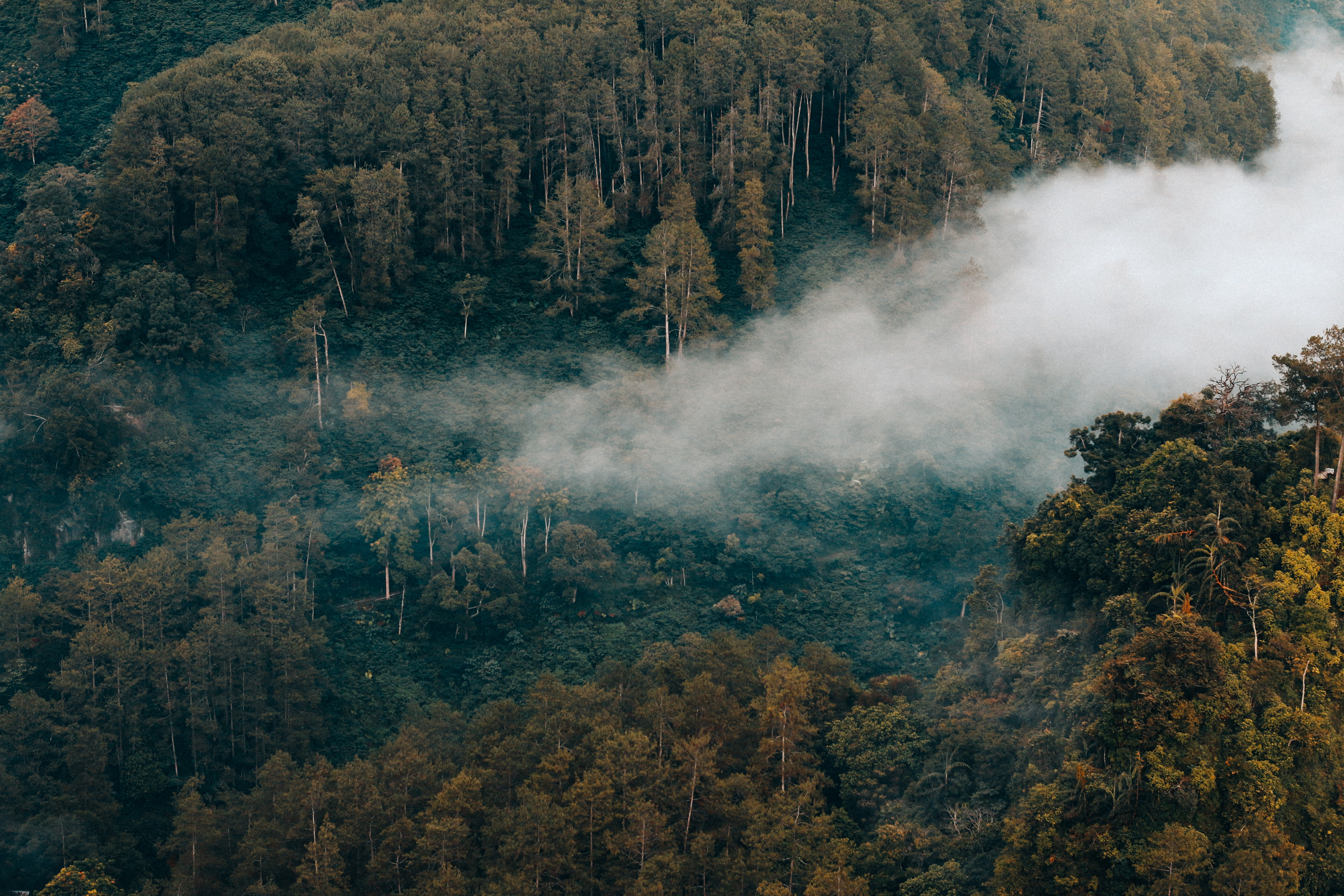 aerial photo of forest with smoke during daytime