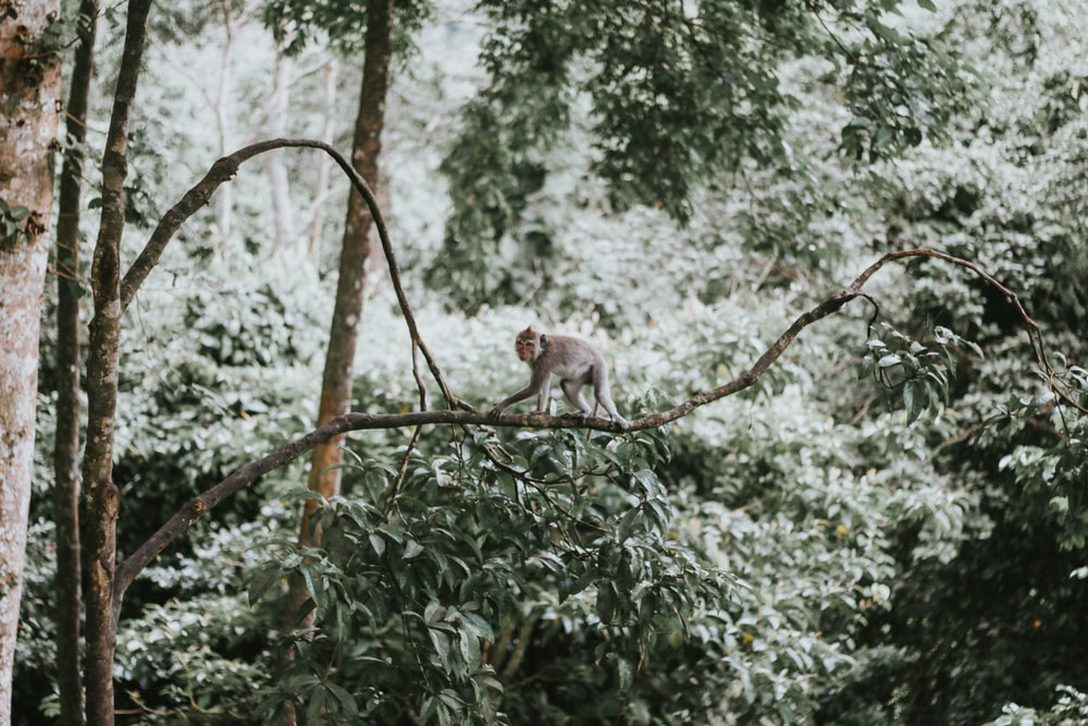 monkey perching on tree branch during daytime